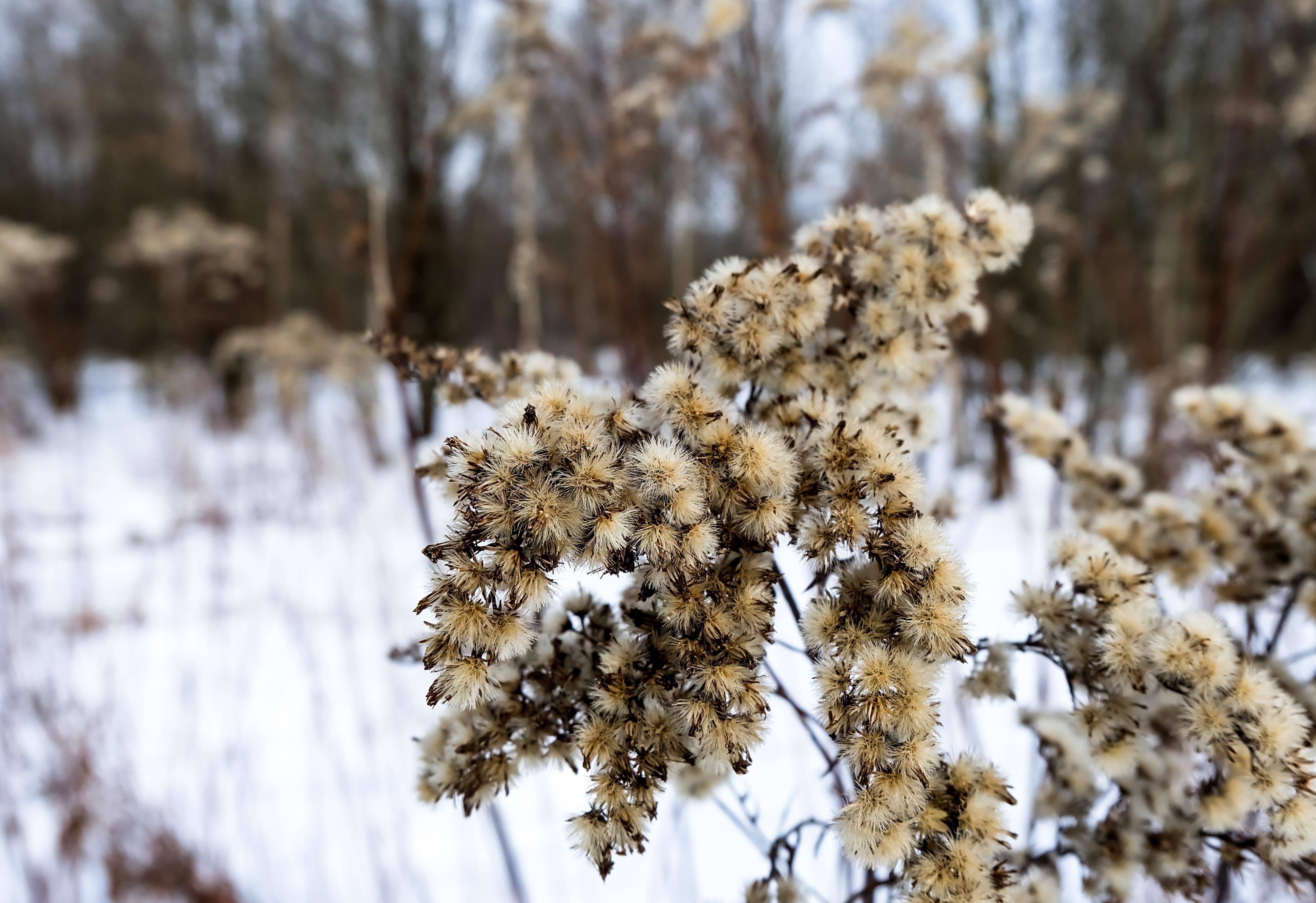 Gambar Pohon Cabang Salju Musim Dingin Menanam Daun Embun