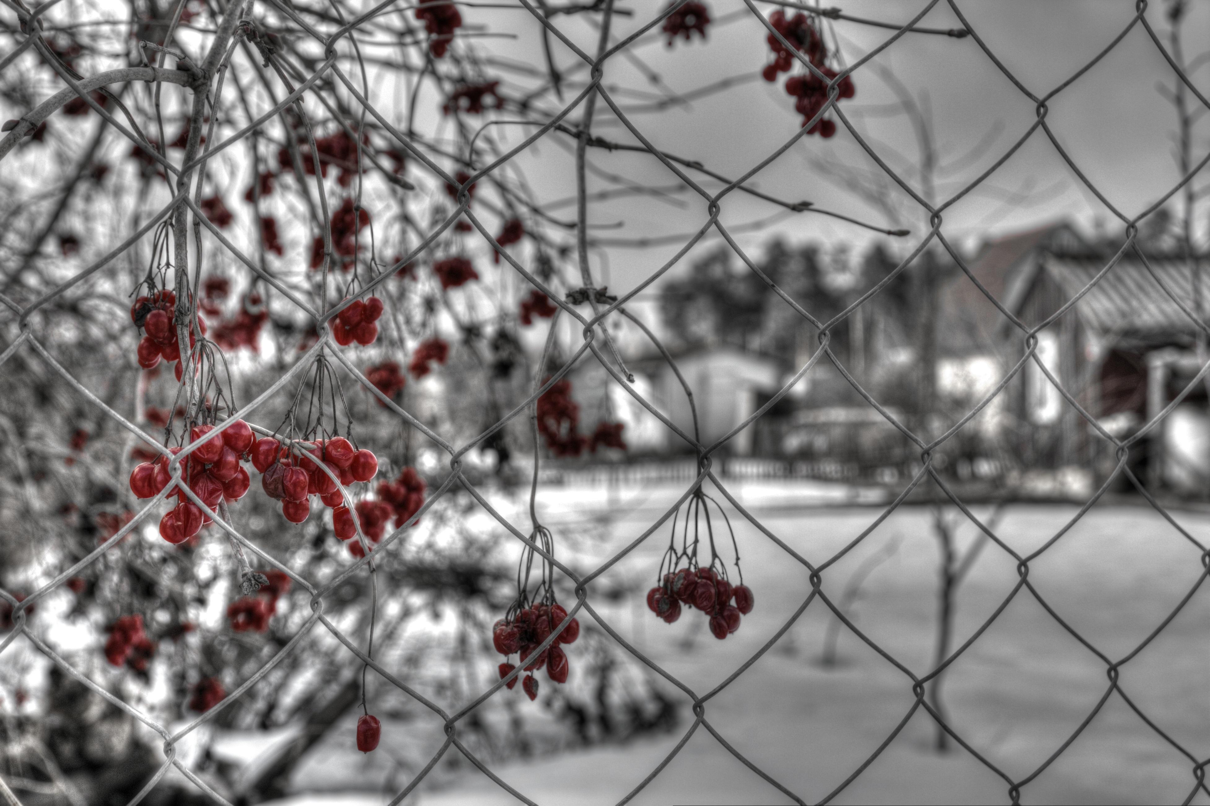 Immagini Belle Albero Natura Ramo La Neve Inverno Bianco E