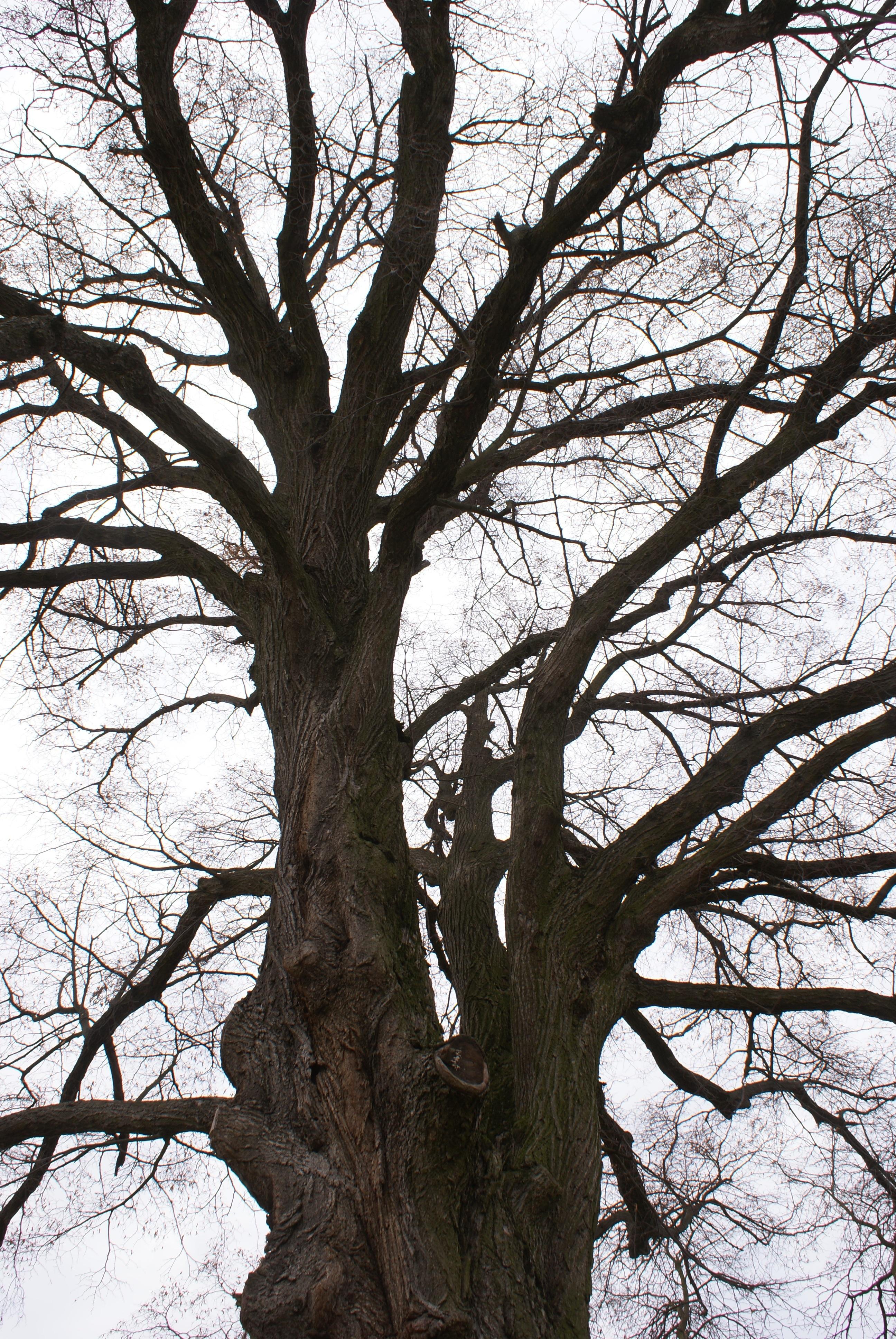Ramas de arbol rbol rama invierno planta madera antiguo - Ramas de arboles ...