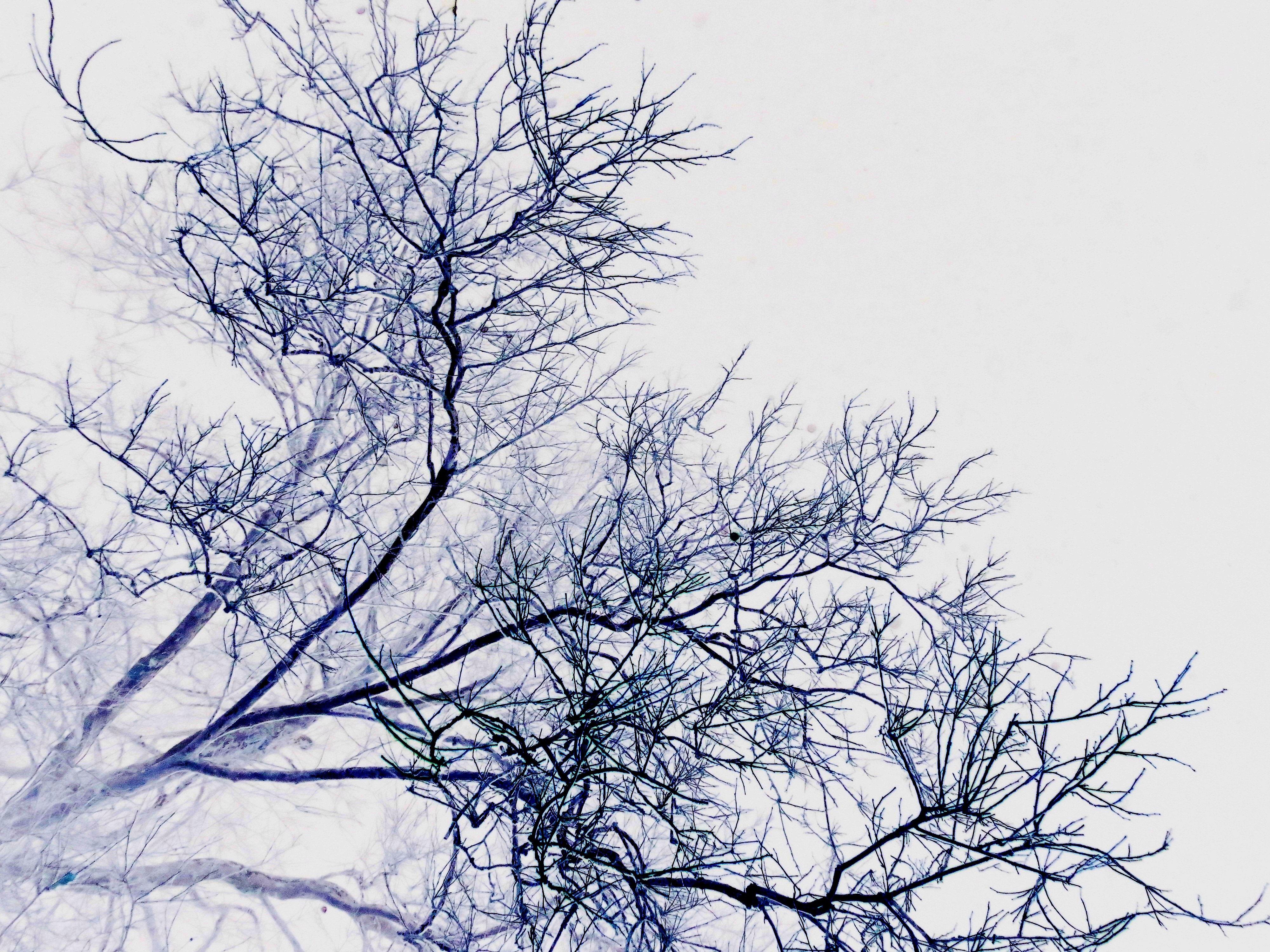 Деревья ветки на фоне картинки