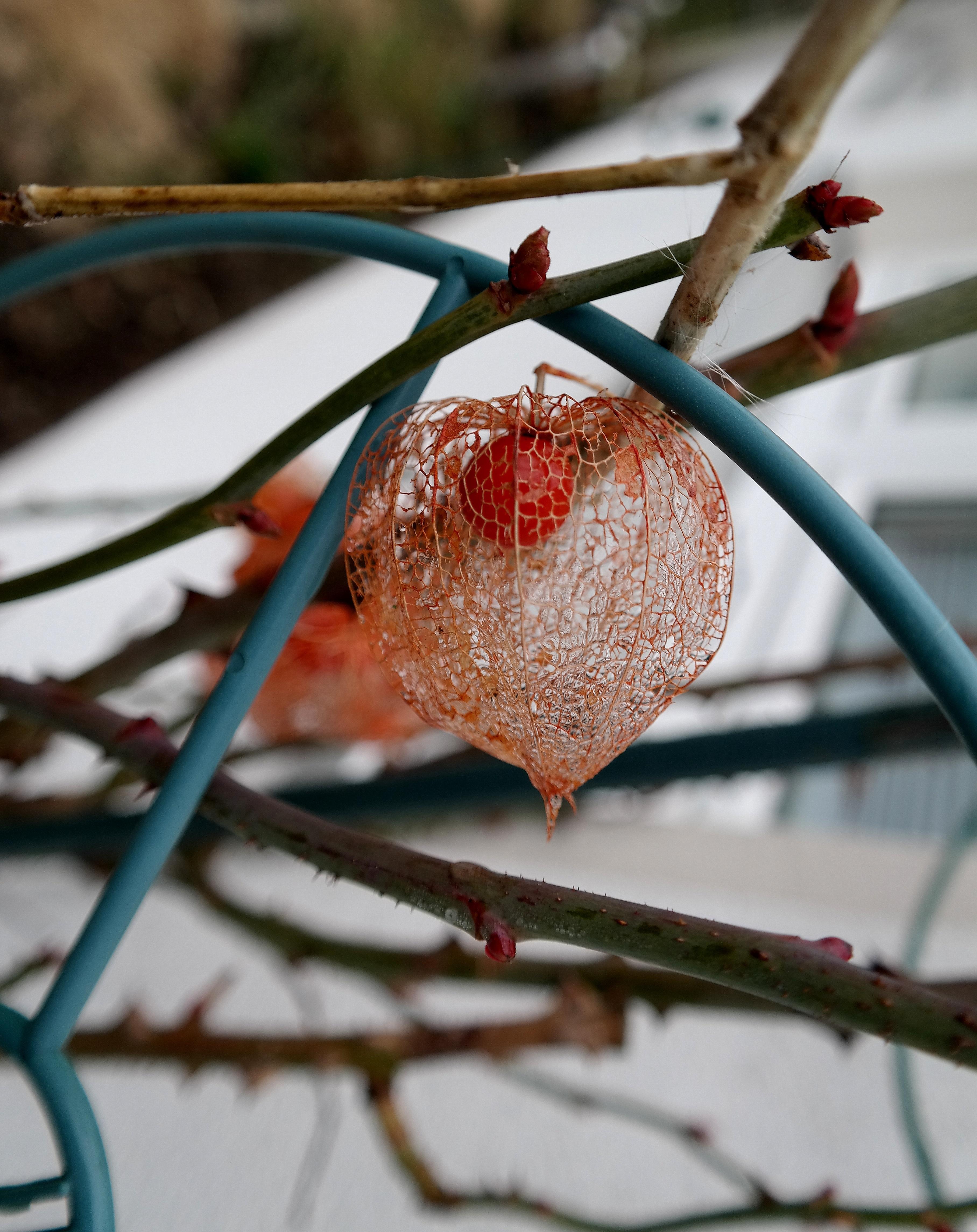 Kostenlose Foto Baum Natur Ast Schnee Winter Pflanze Blatt