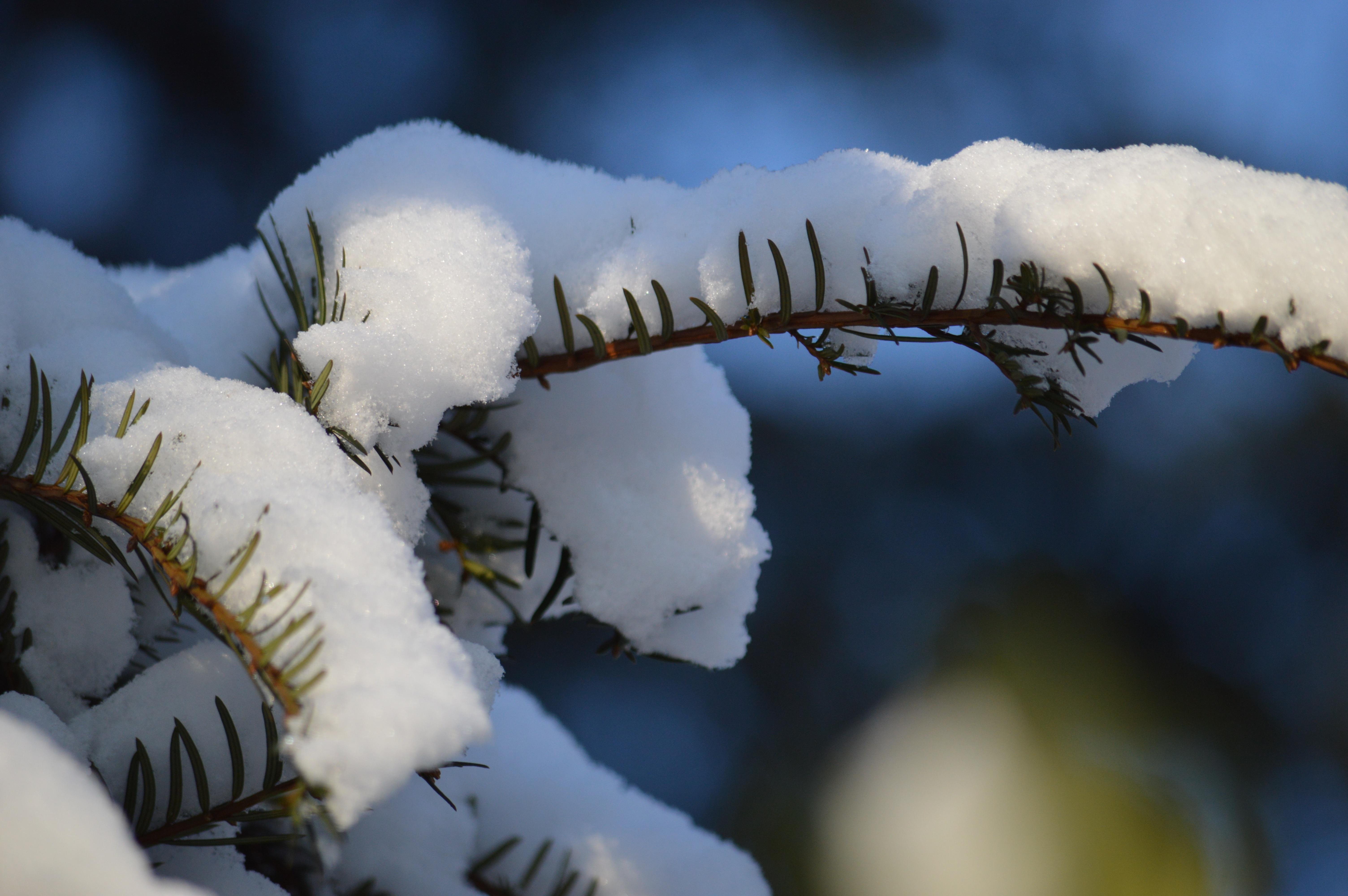 Цветы зимой картинки для детей, открытки