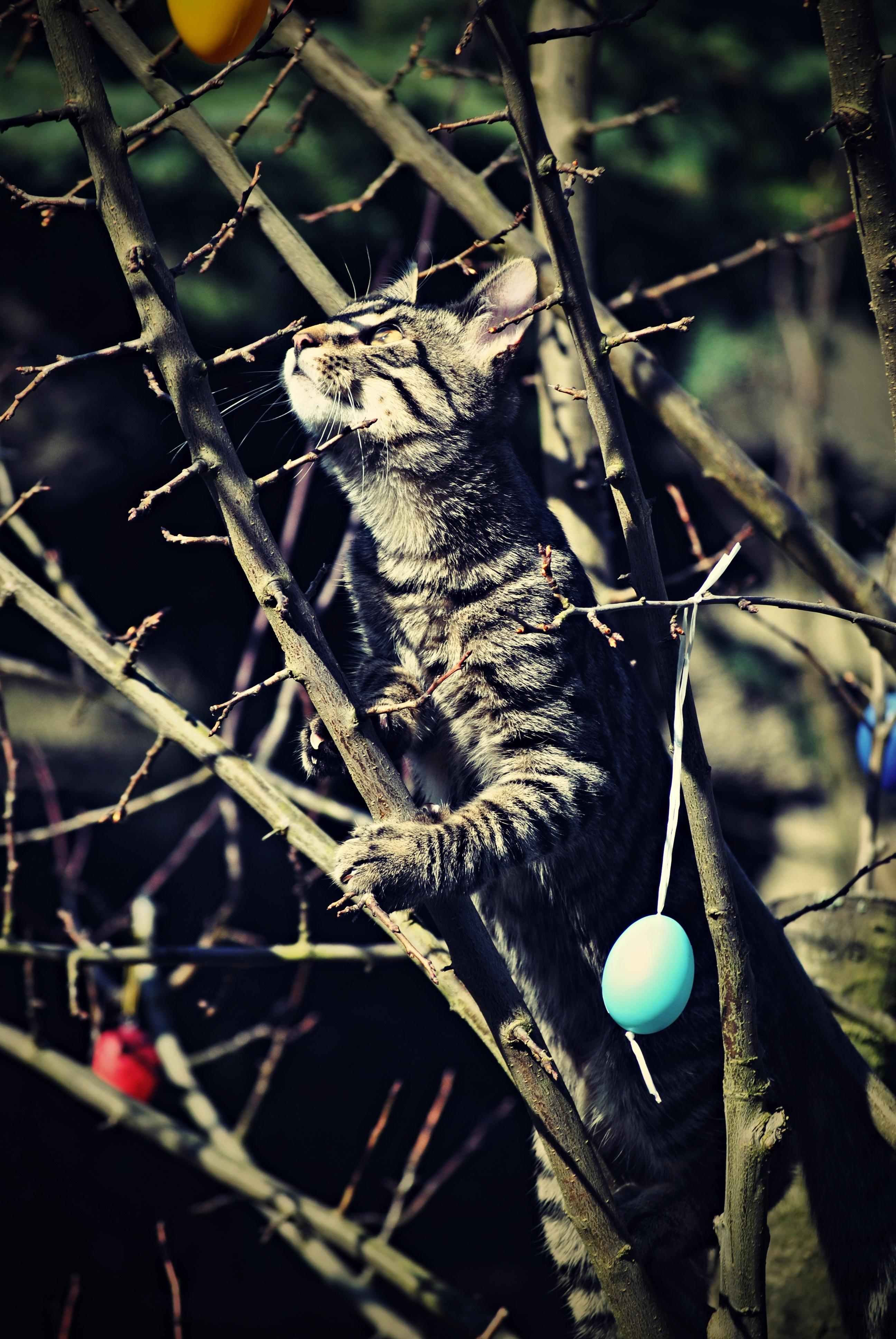 Fotoğraf Ağaç Doğa şube Güneş Hayvan Vahşi Hayat Evcil
