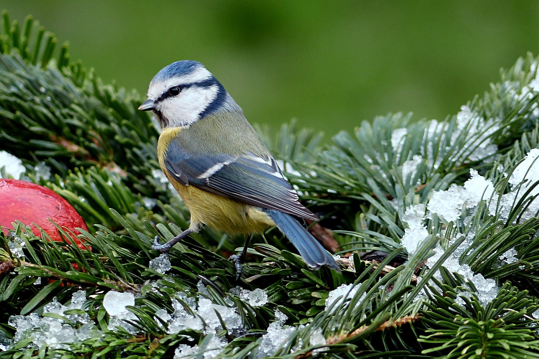 картинки лесные птички зимой выбор