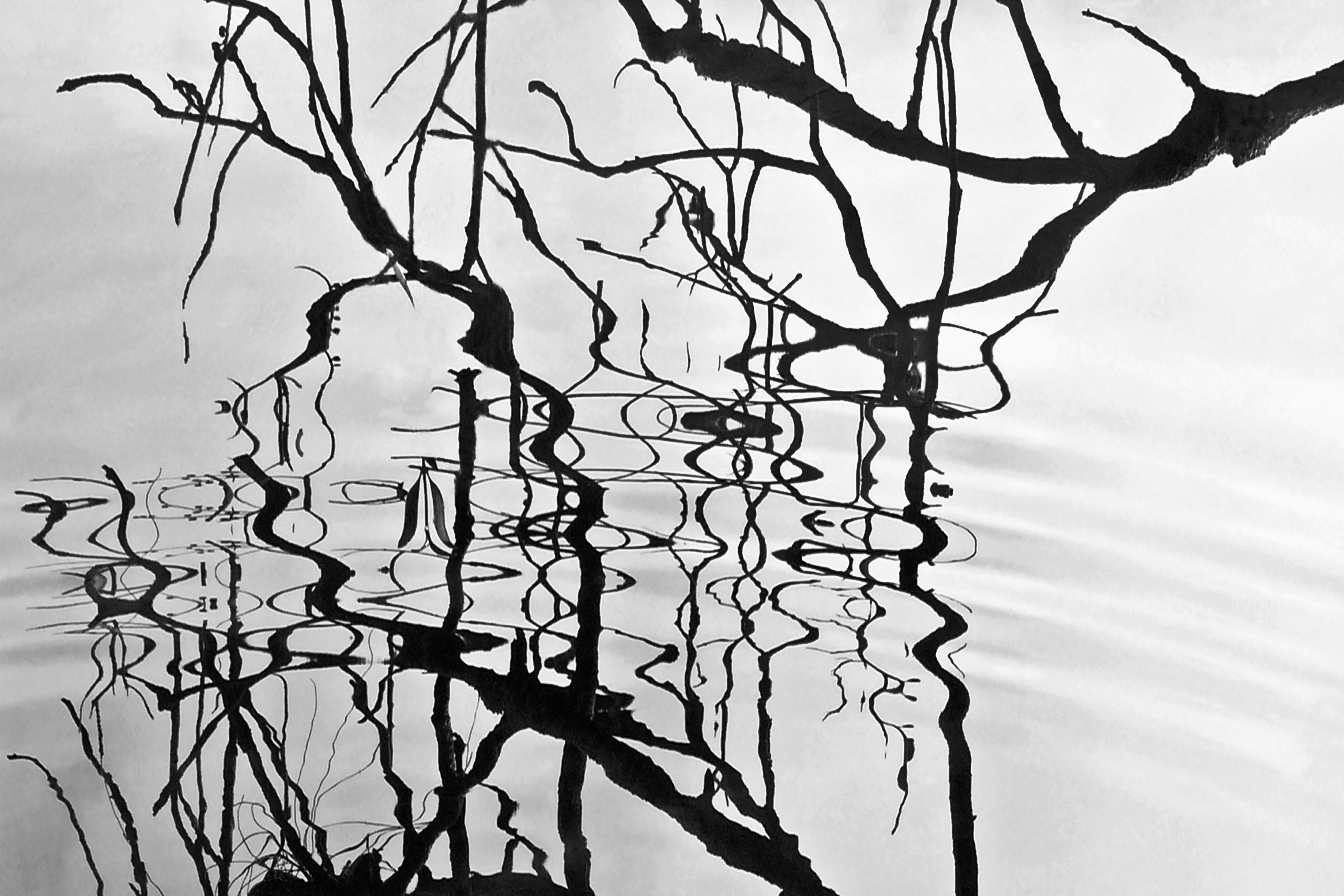 Images Gratuites Arbre La Nature Branche Hiver Clôture Noir