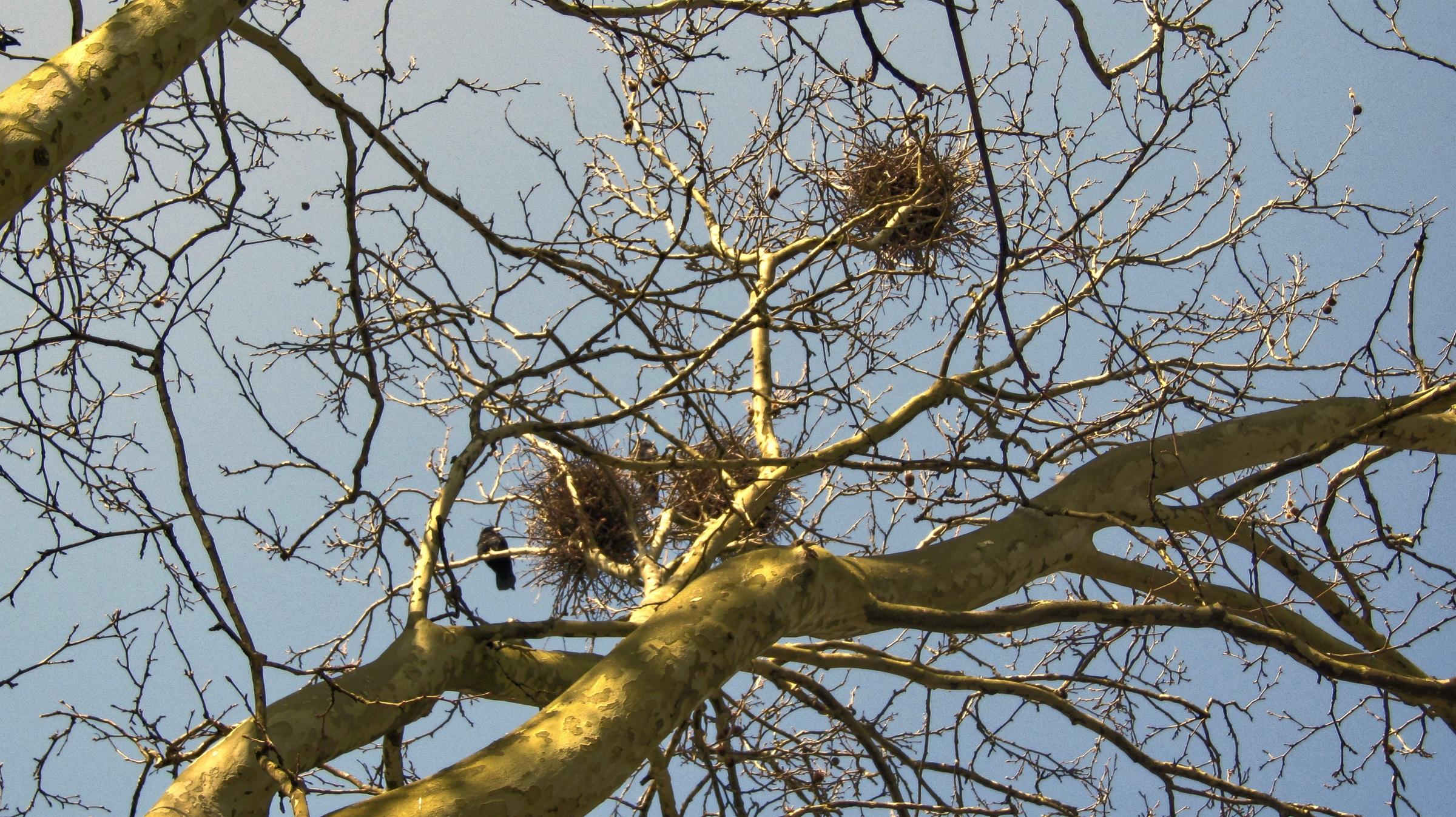 выбора картинка гнезда на деревьях все