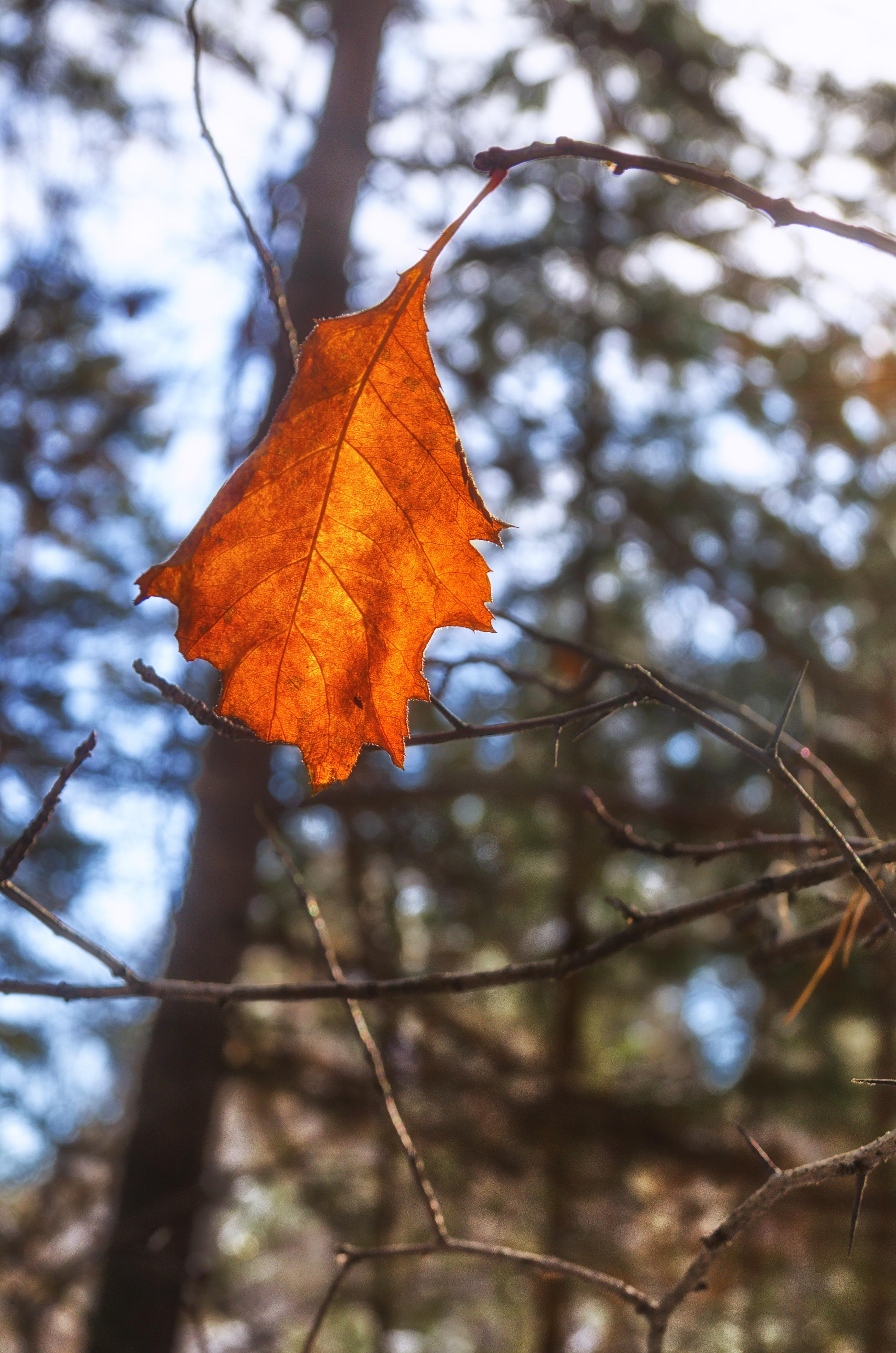 Fotos gratis : árbol, naturaleza, rama, invierno, luz de sol, flor ...