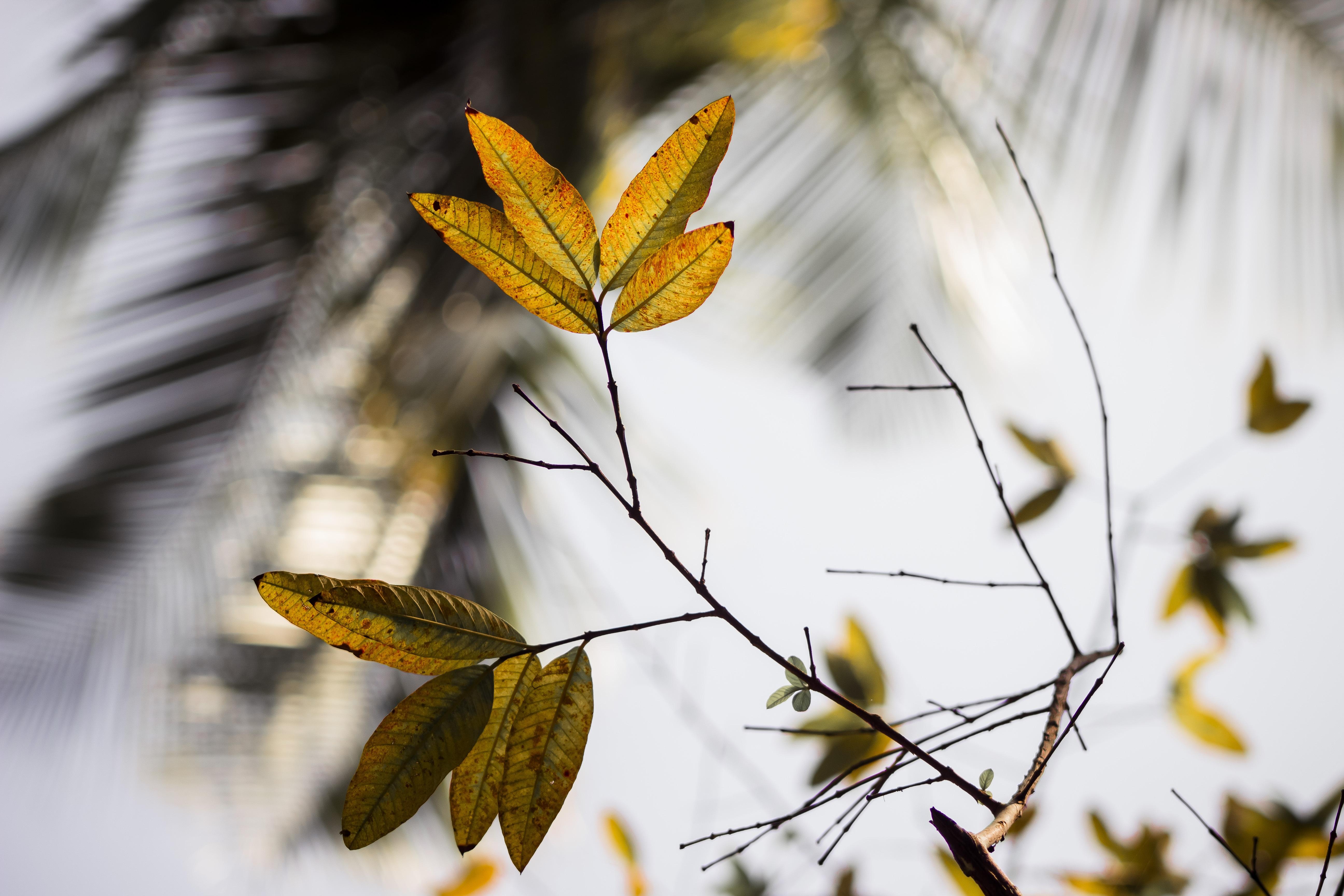 Baum Natur Ast Winter scharf Pflanze Sonnenlicht Morgen Blatt Blume Frost Frühling Grün Herbst Botanik Gelb