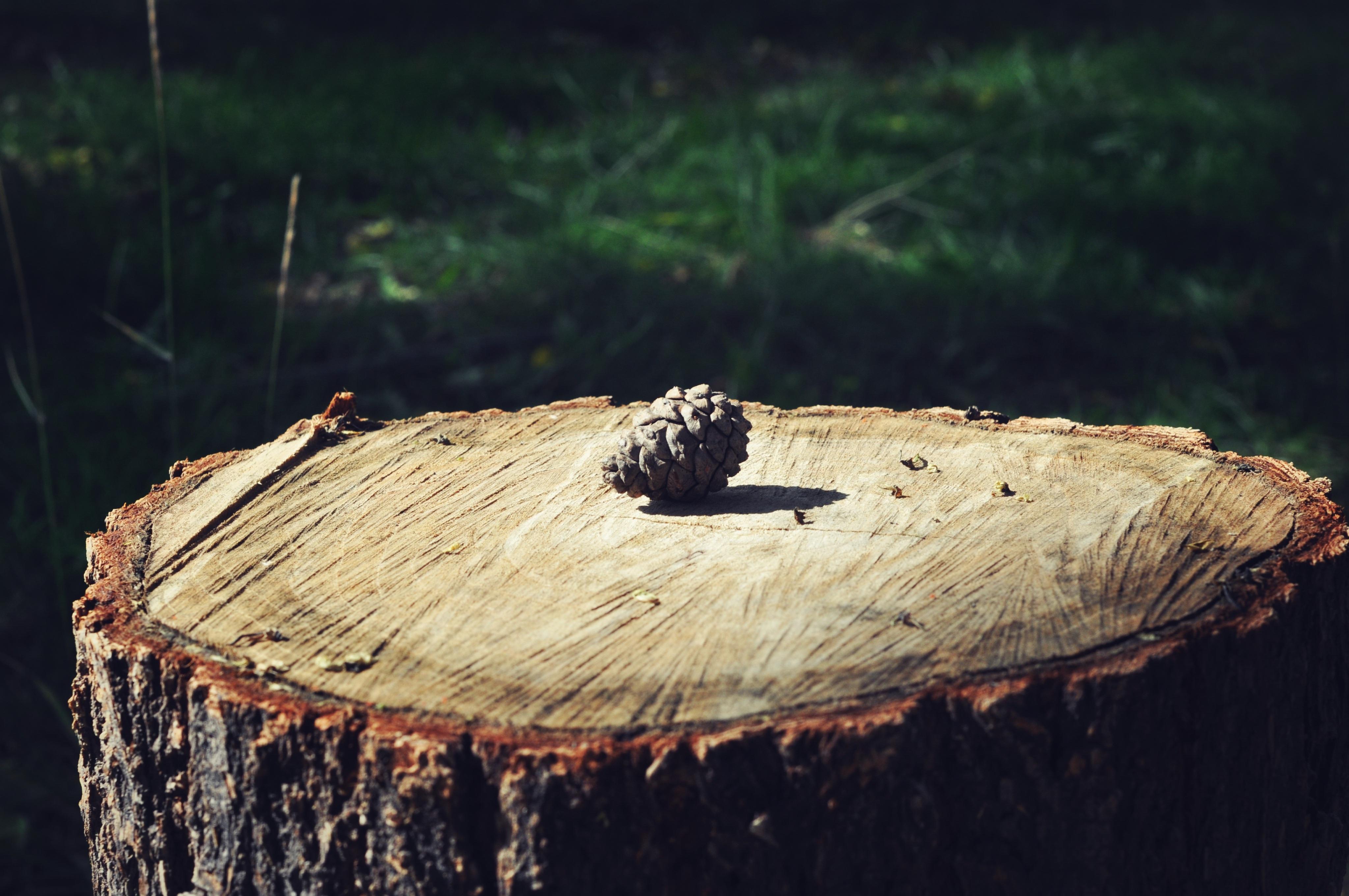 картинка деревья пенечки обзор обо