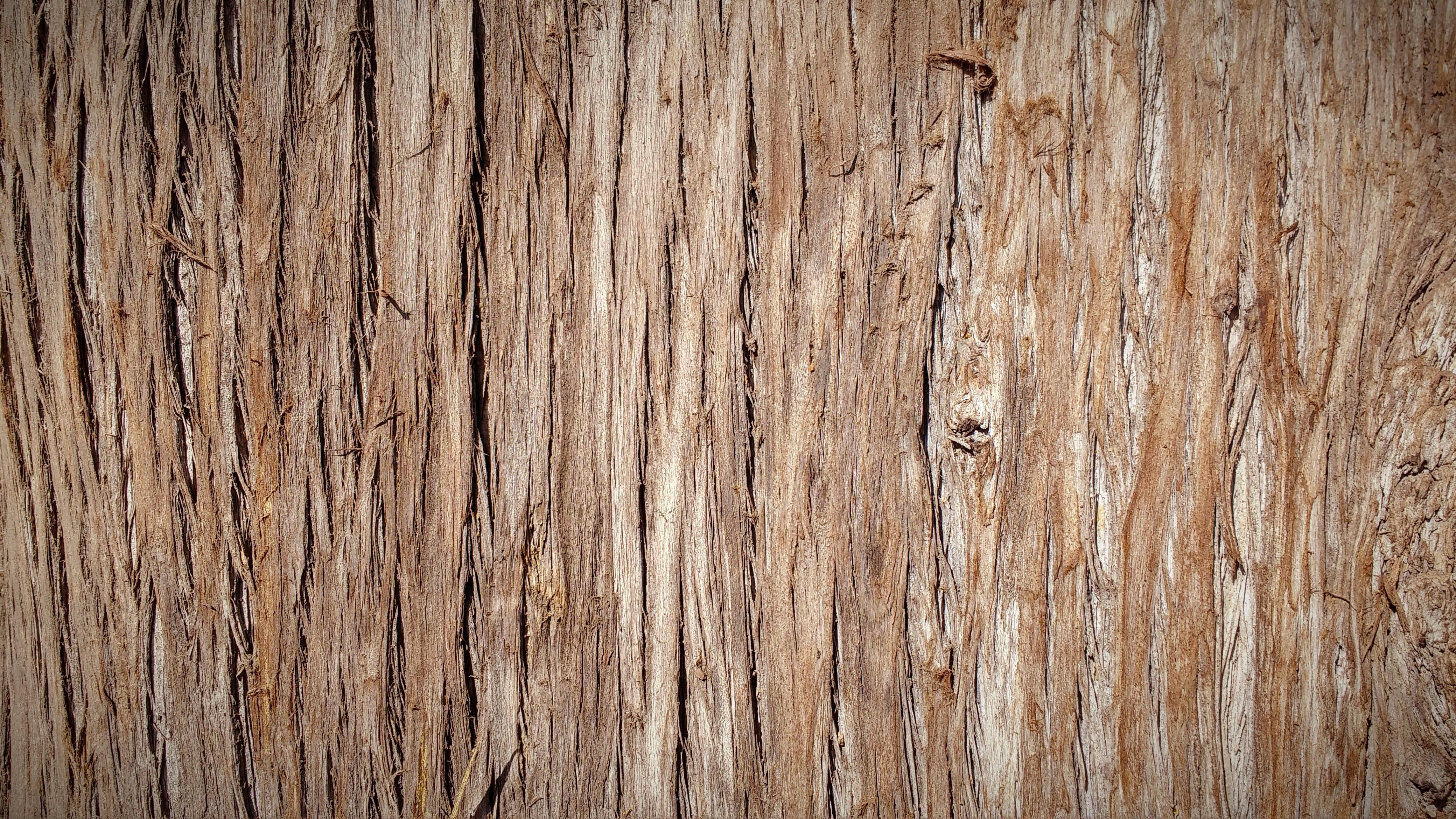 Kostenlose foto baum natur ast holz planke stock for Sfondo legno hd