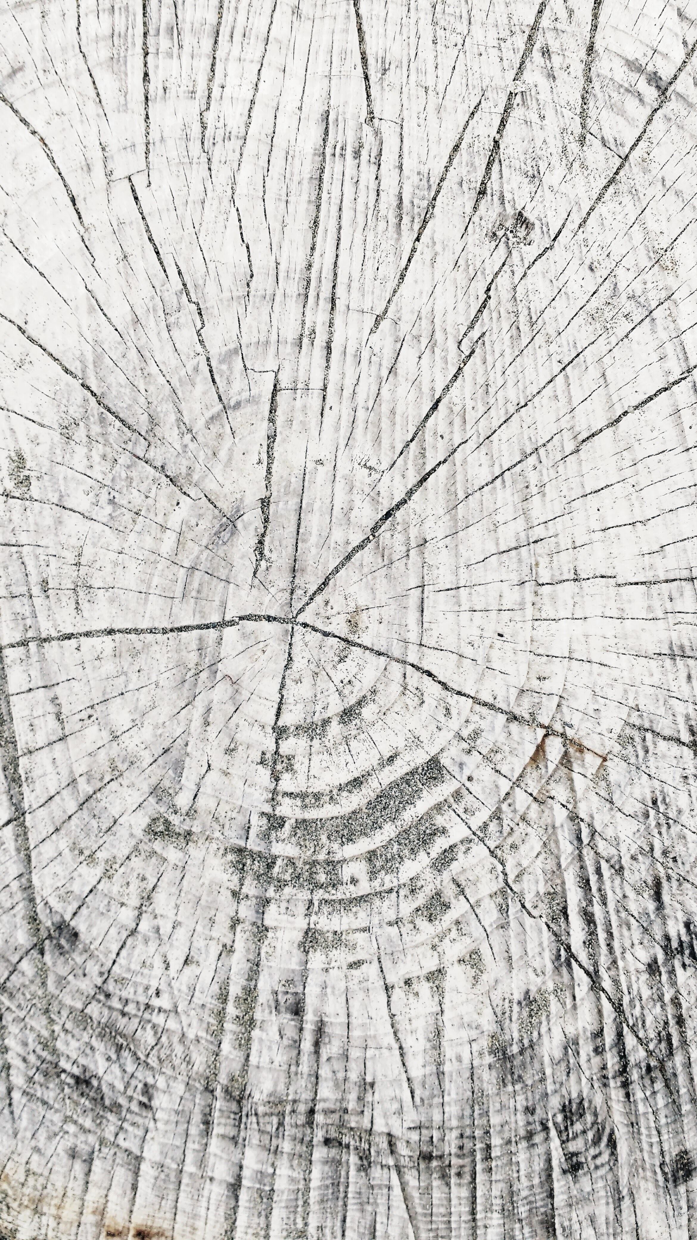 Images Gratuites Arbre La Nature Branche Blanc Texture