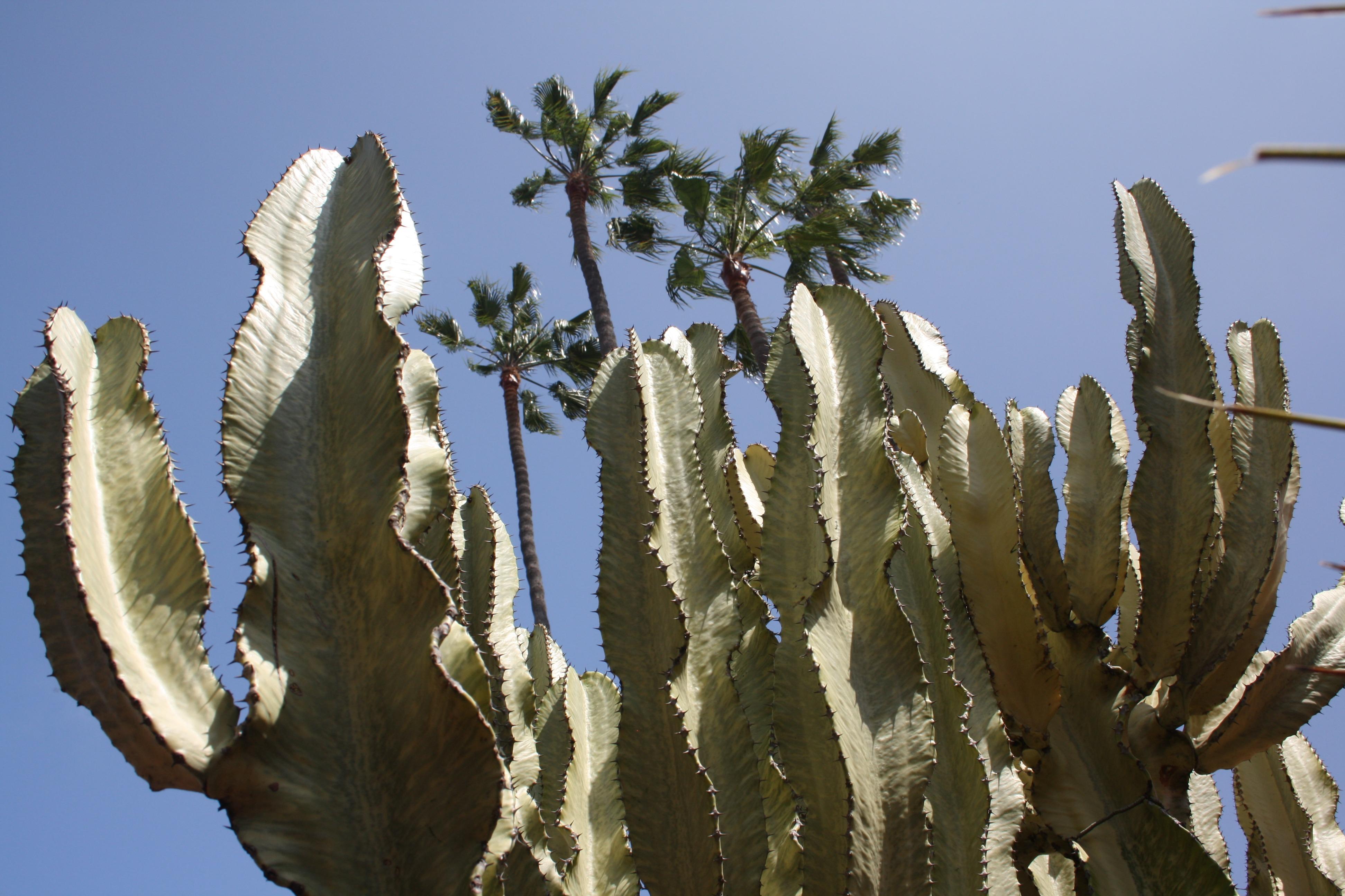 Free Cactus and Palm trees Stock Photo - FreeImages.com   Name Cactus Palm Tree