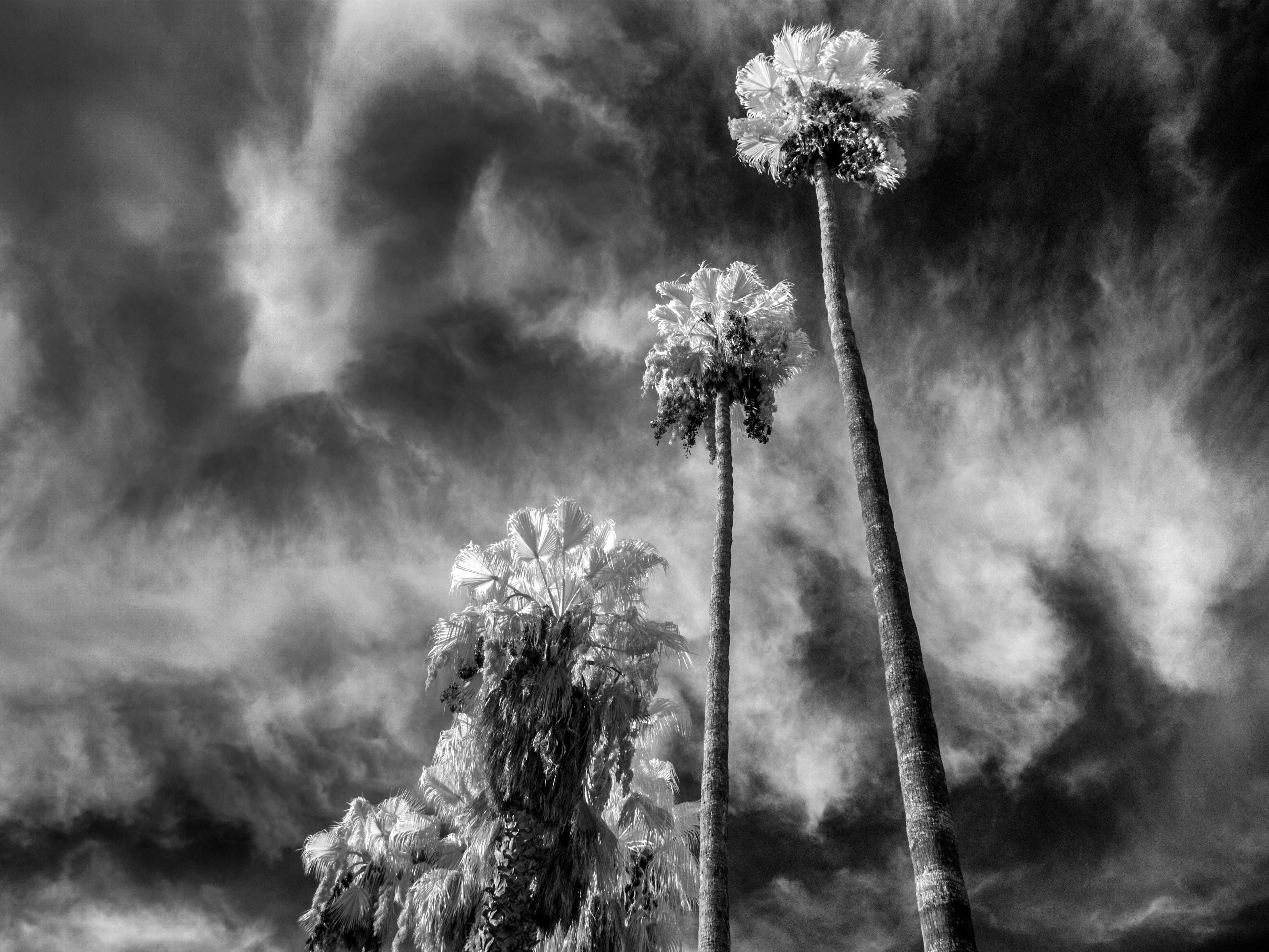 развести картинки цветы мрака середине семидесятых чаде