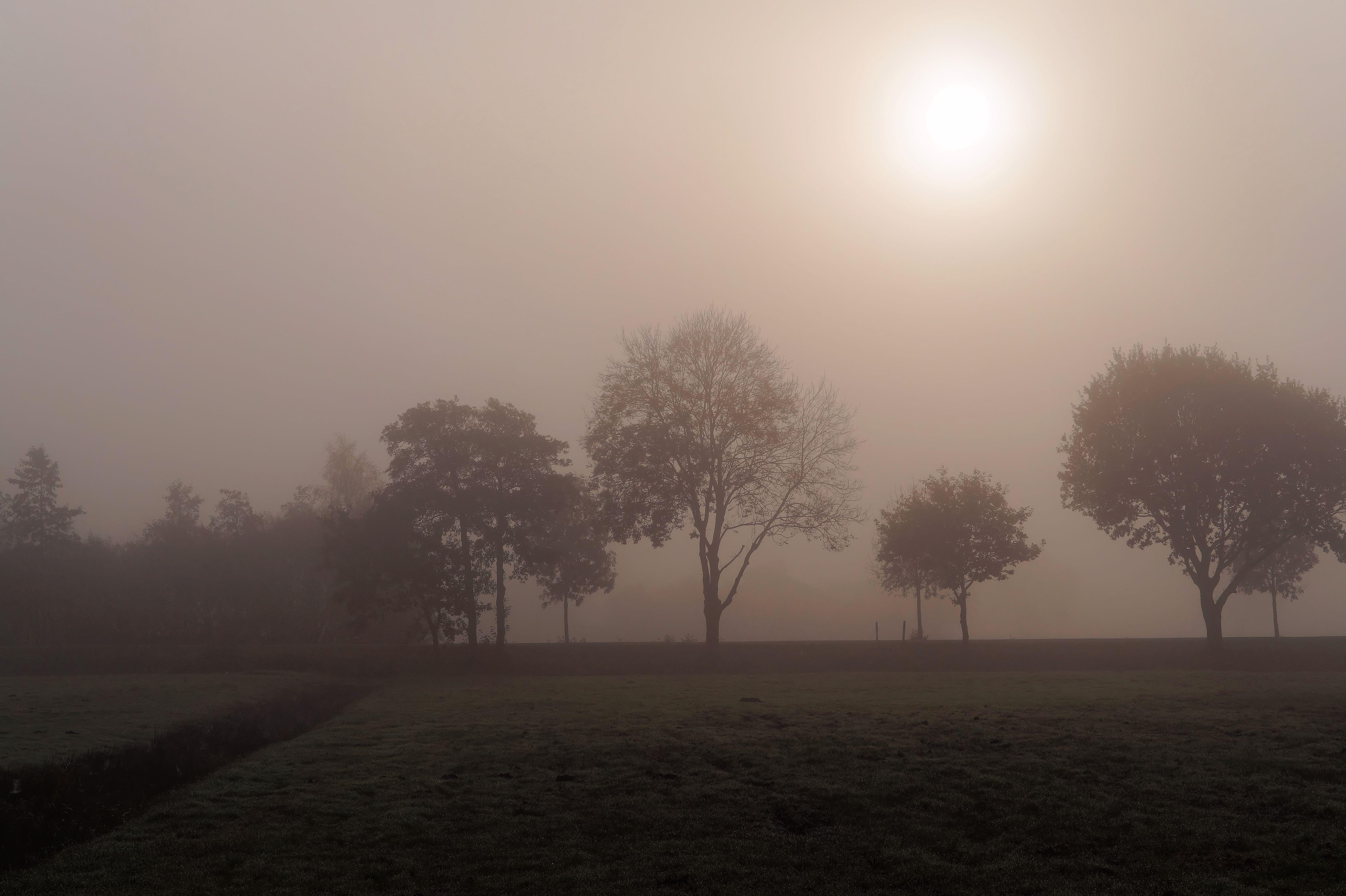sun fog sunrise trees - photo #5