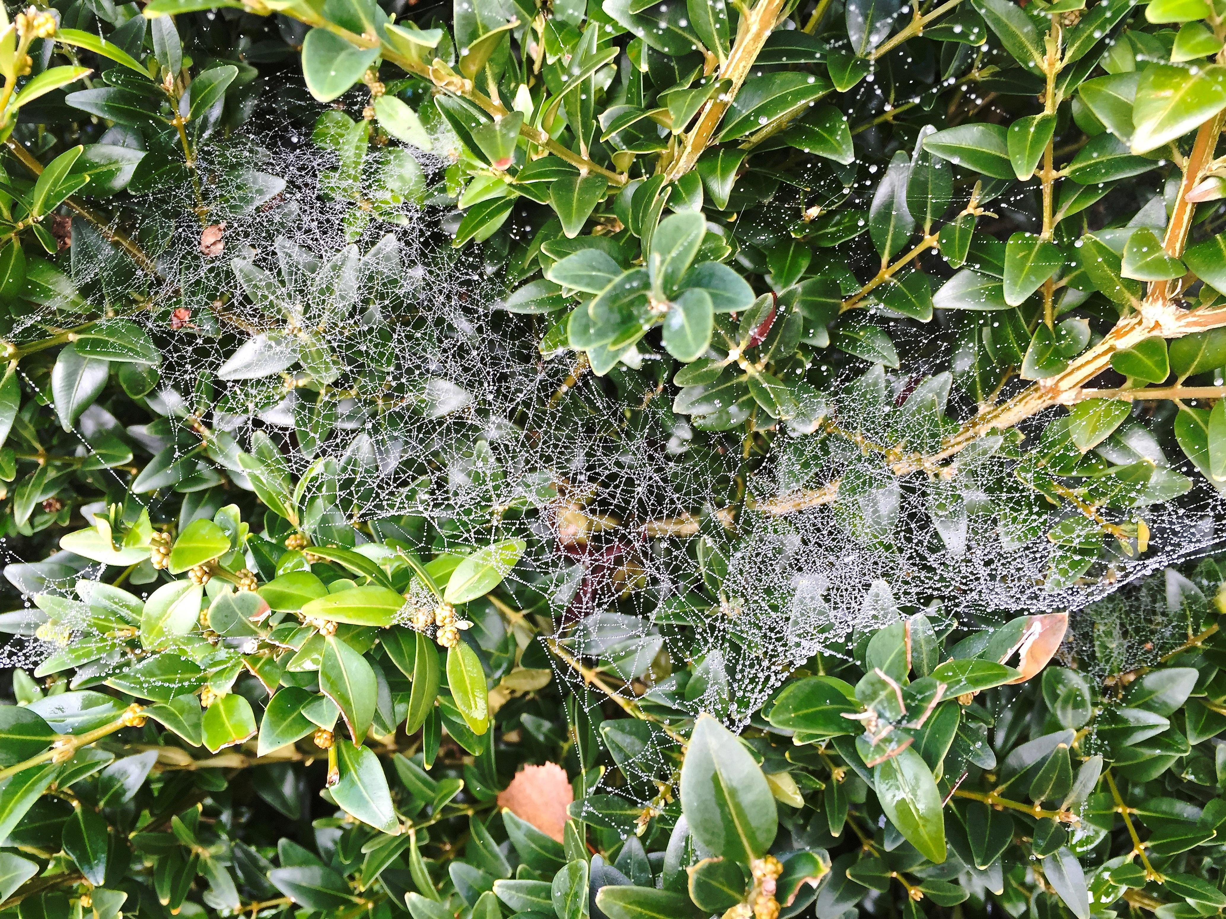 Images gratuites arbre la nature fruit feuille fleur for Arbres a feuilles persistantes