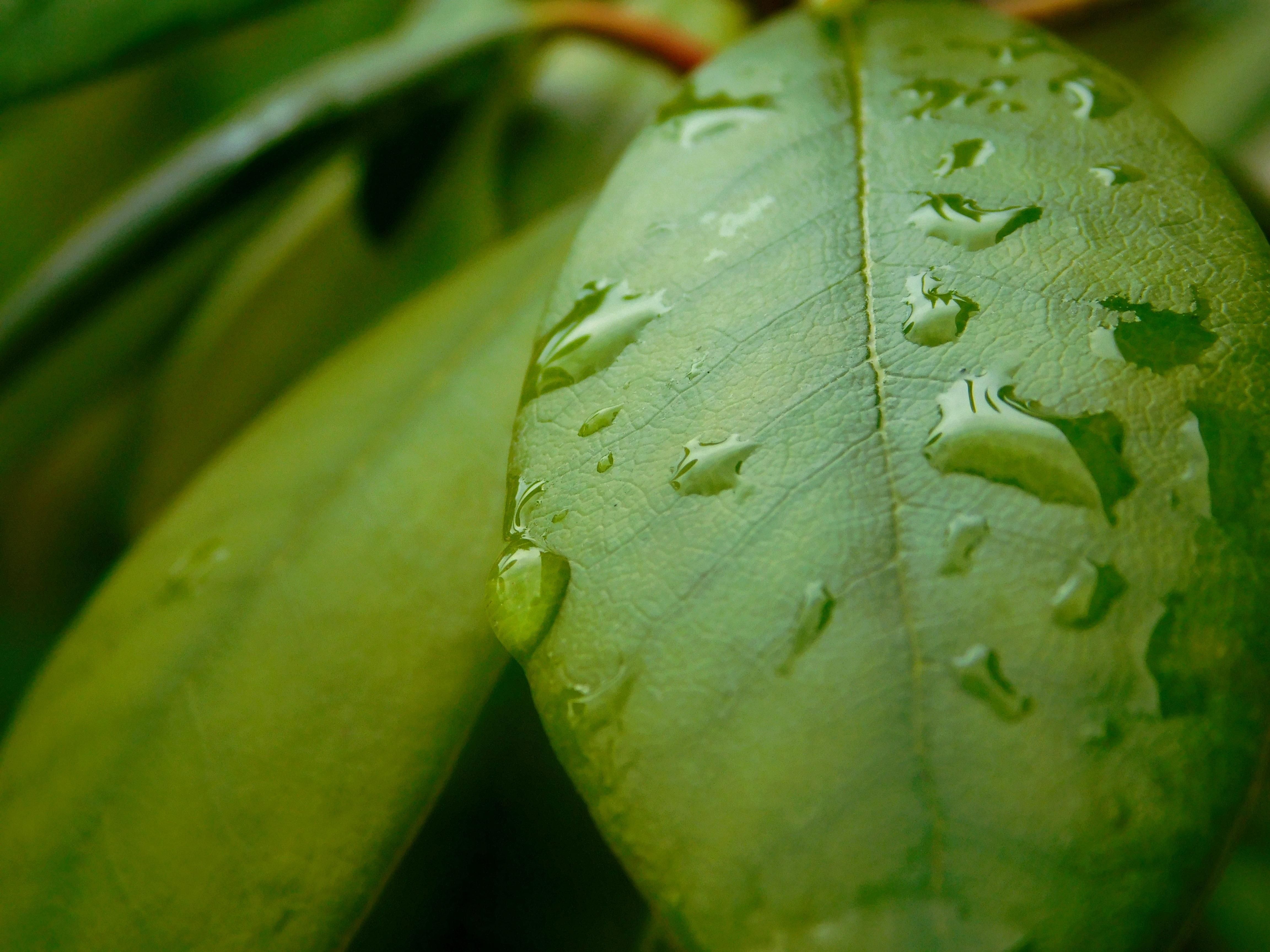plante verte humidite