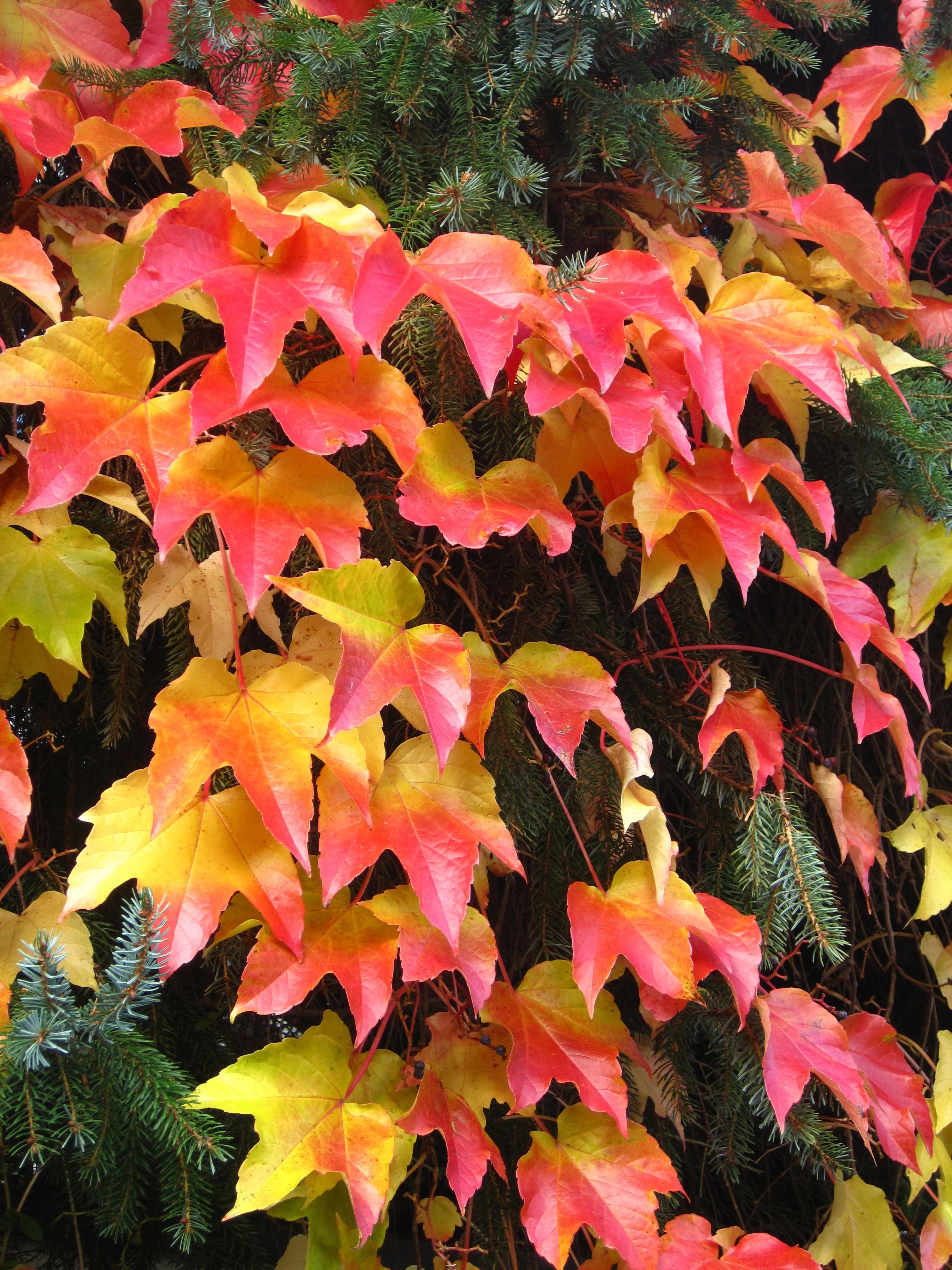 Free Images : tree, nature, leaf, flower, petal, red, botany, flora ...