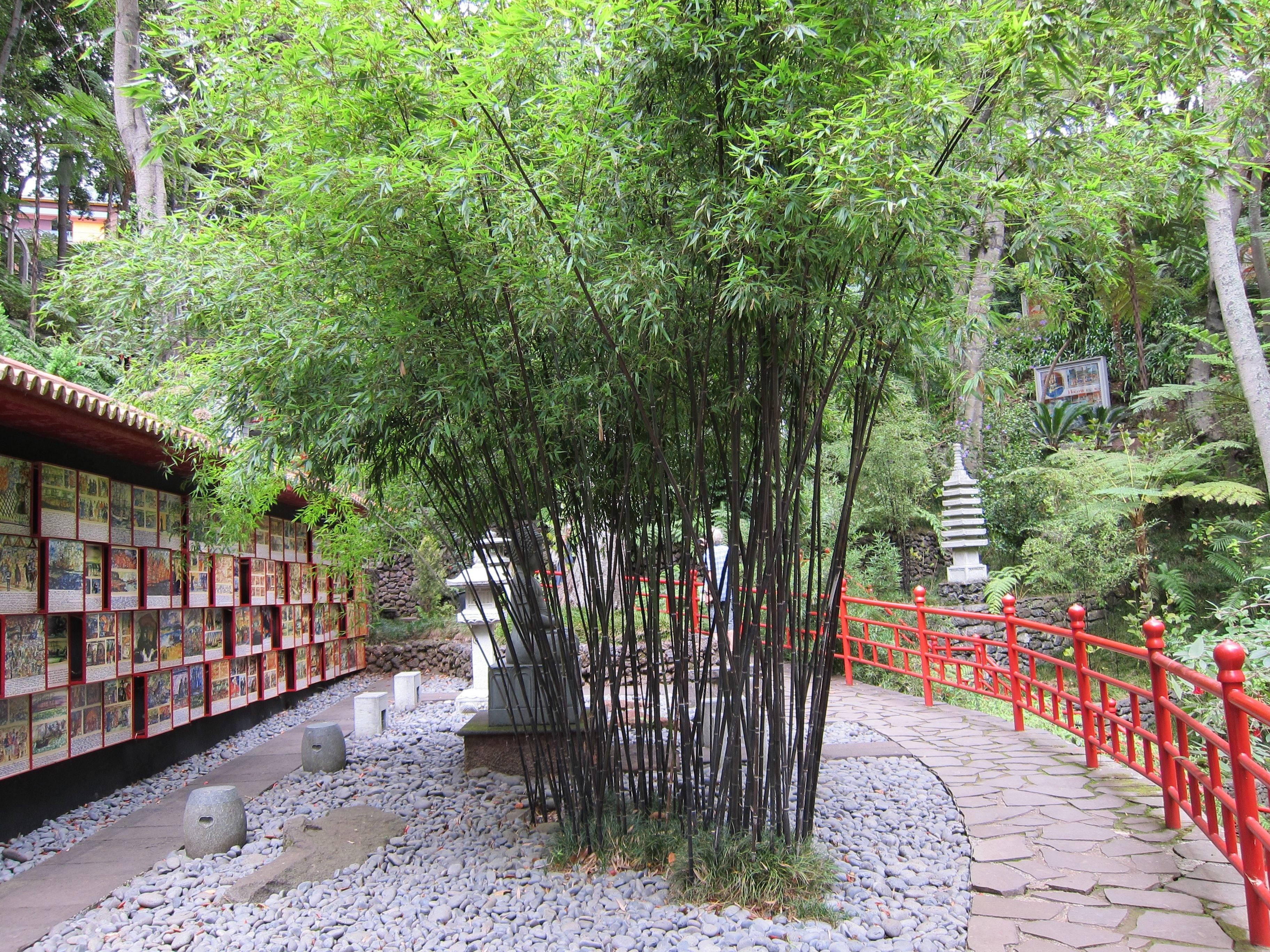 Fotos gratis rbol naturaleza flor pasarela verde for Arboles jardin japones