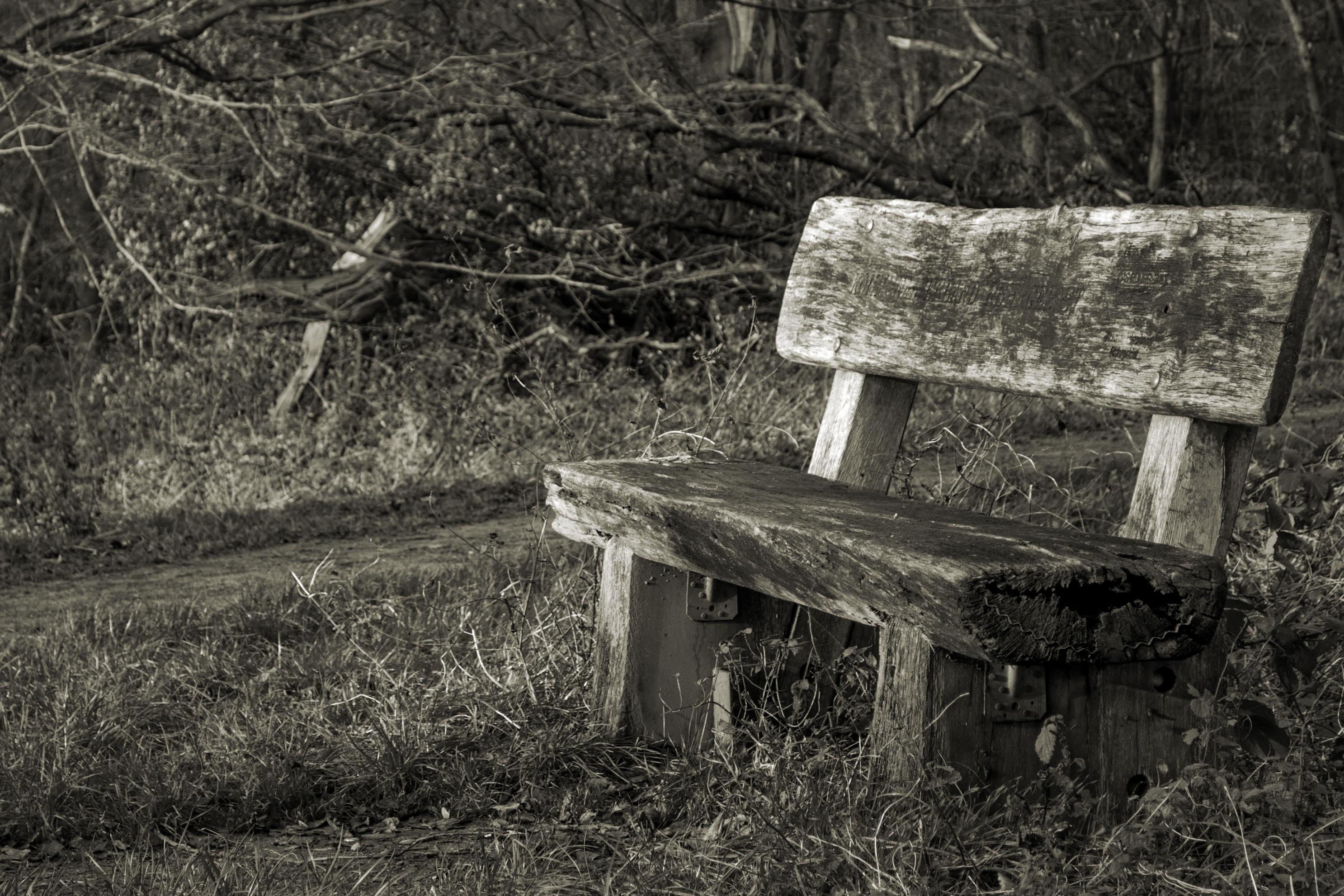 картинки на тему скамья у ворот плодоношение позволяет