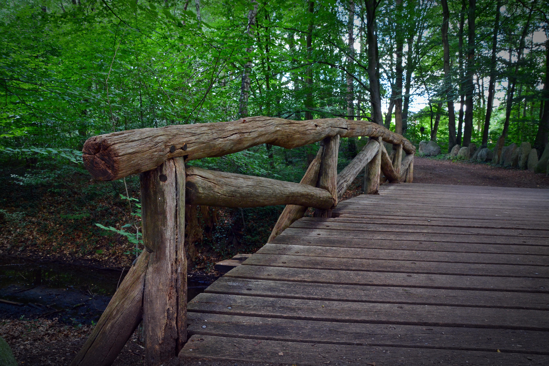 images gratuites arbre la nature for t promenade piste pont feuille vieux passerelle. Black Bedroom Furniture Sets. Home Design Ideas
