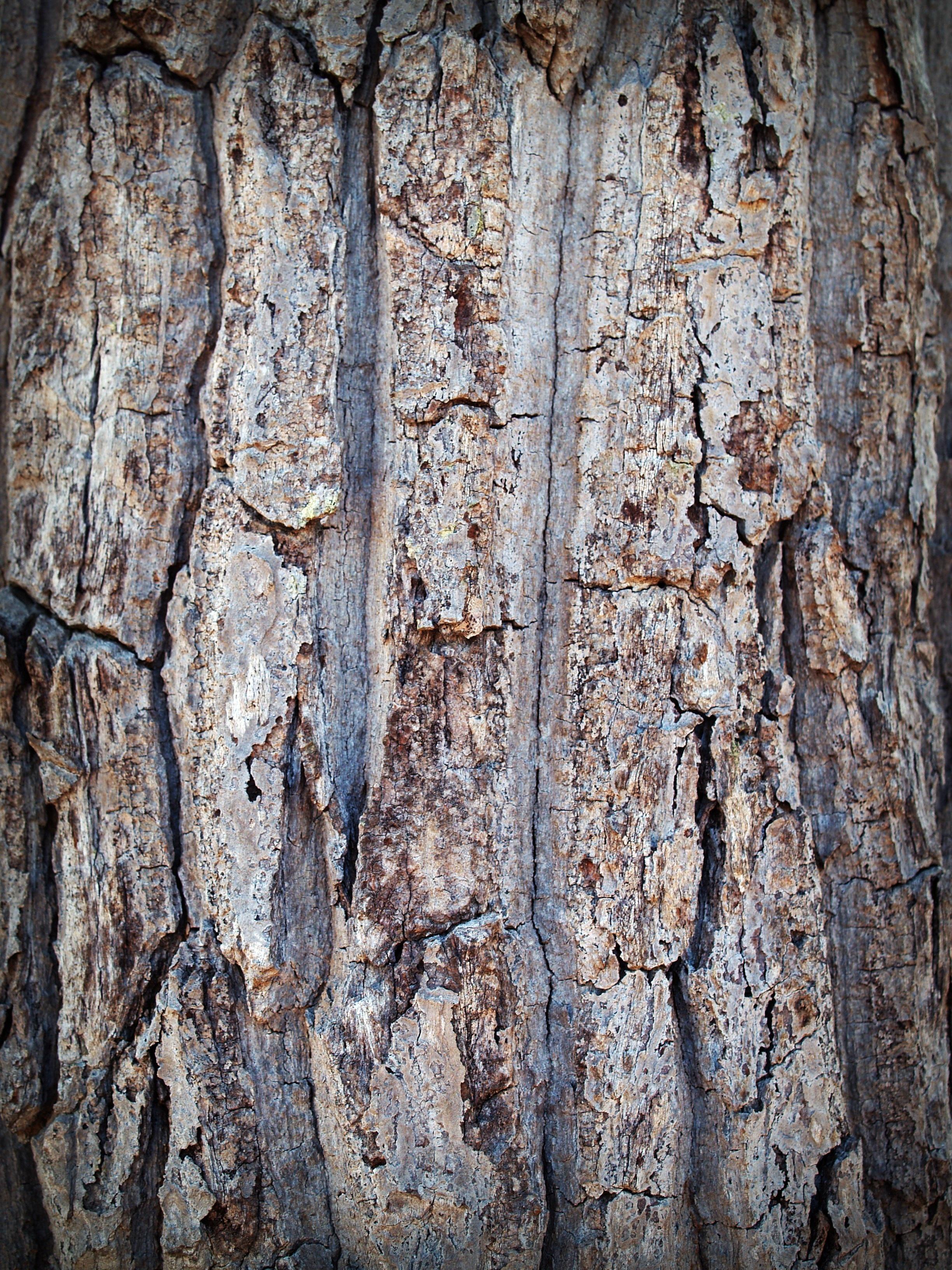 무료 이미지 : 숲, 분기, 추상, 판, 목재, 고대 미술, 조직, 널빤지 ...
