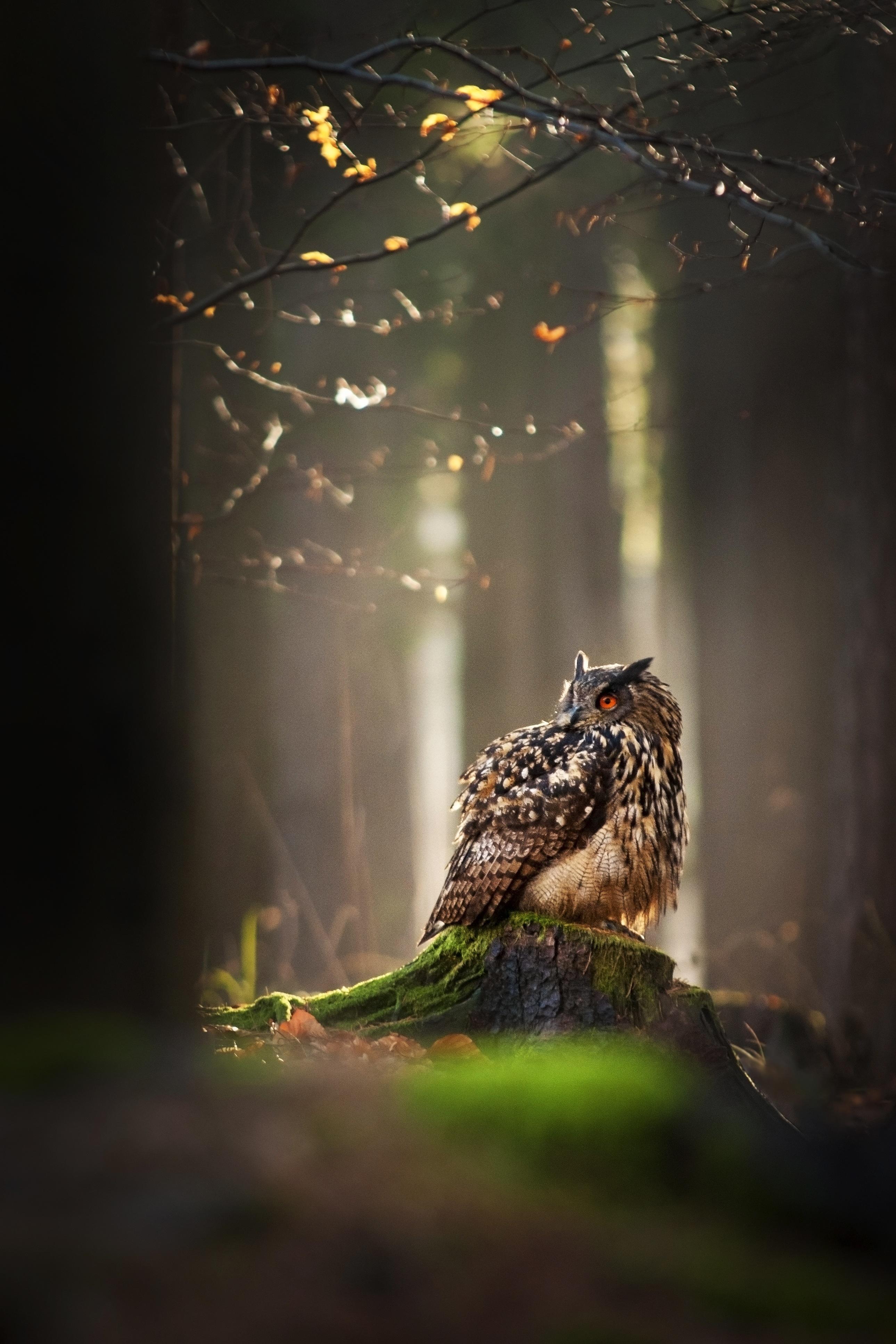Free Images : tree, nature, branch, bird, light, night ... Darkness