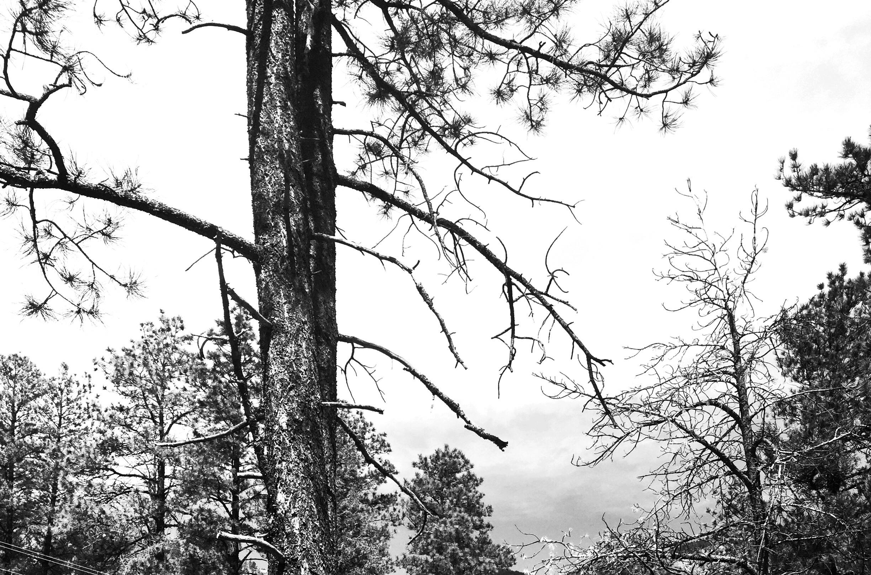 Download 83 Background Hutan Hitam Putih Gratis