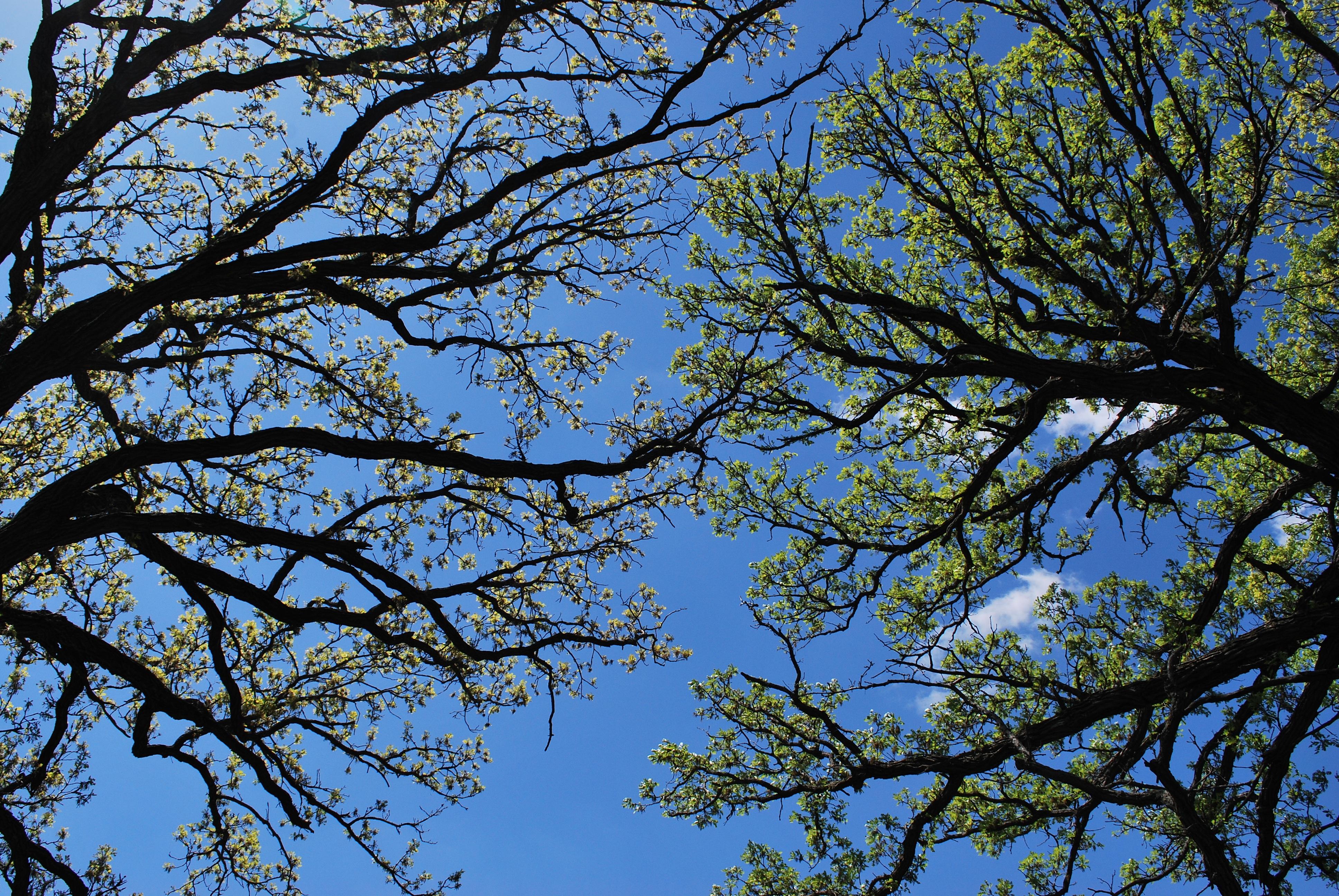 Images Gratuites Arbre La Nature For 234 T Branche Fleur
