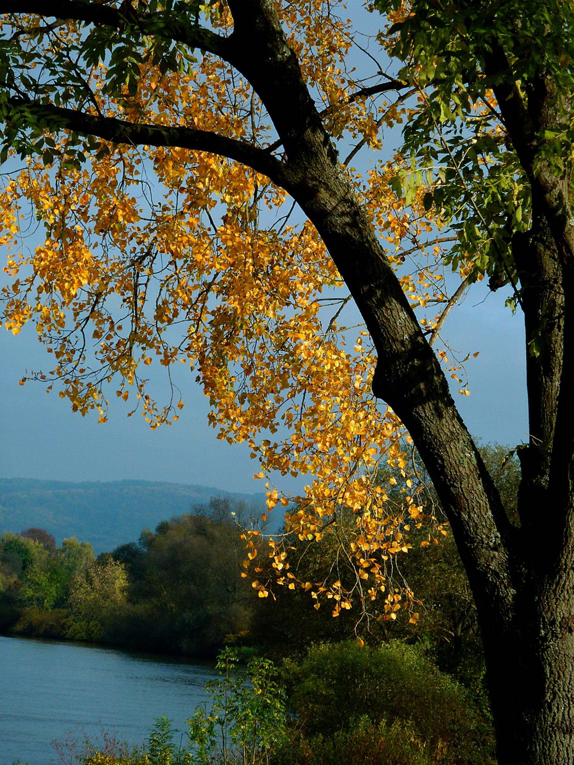 Assez Images Gratuites : arbre, la nature, branche, fleur, plante  TM11