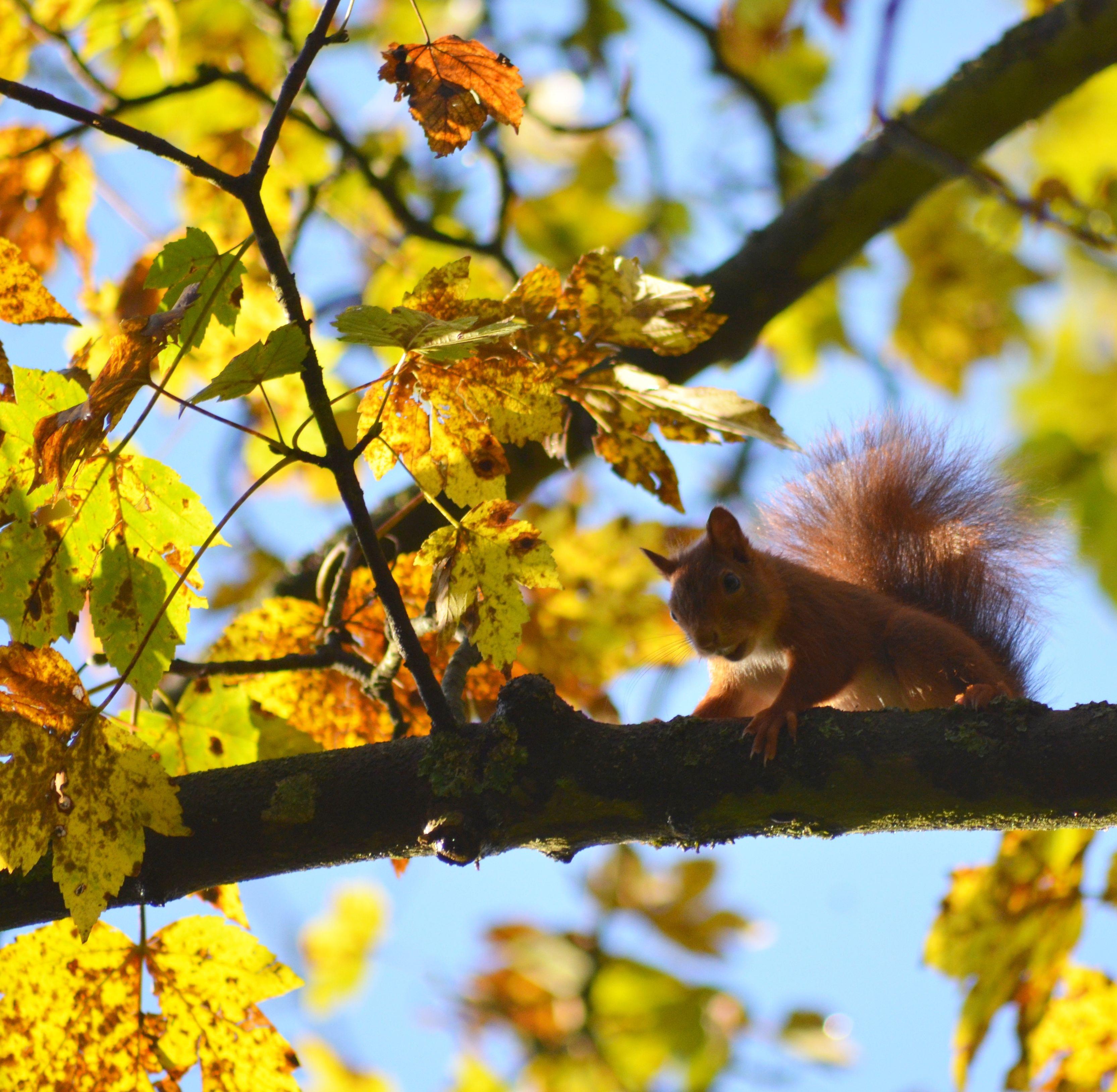 фото белки на дереве осень