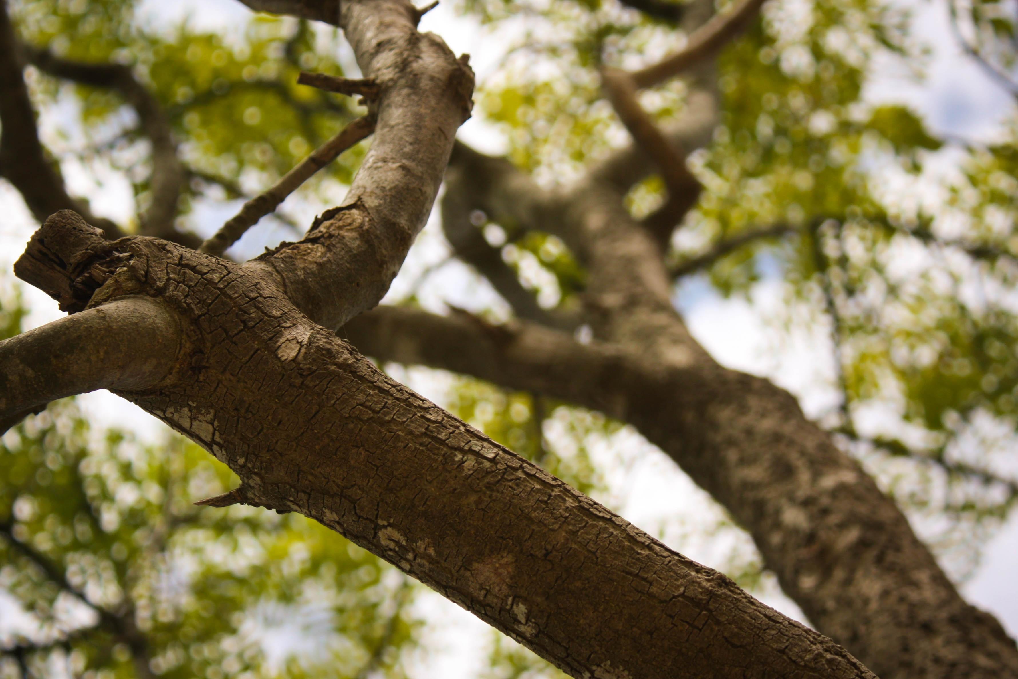 сучок на дереве