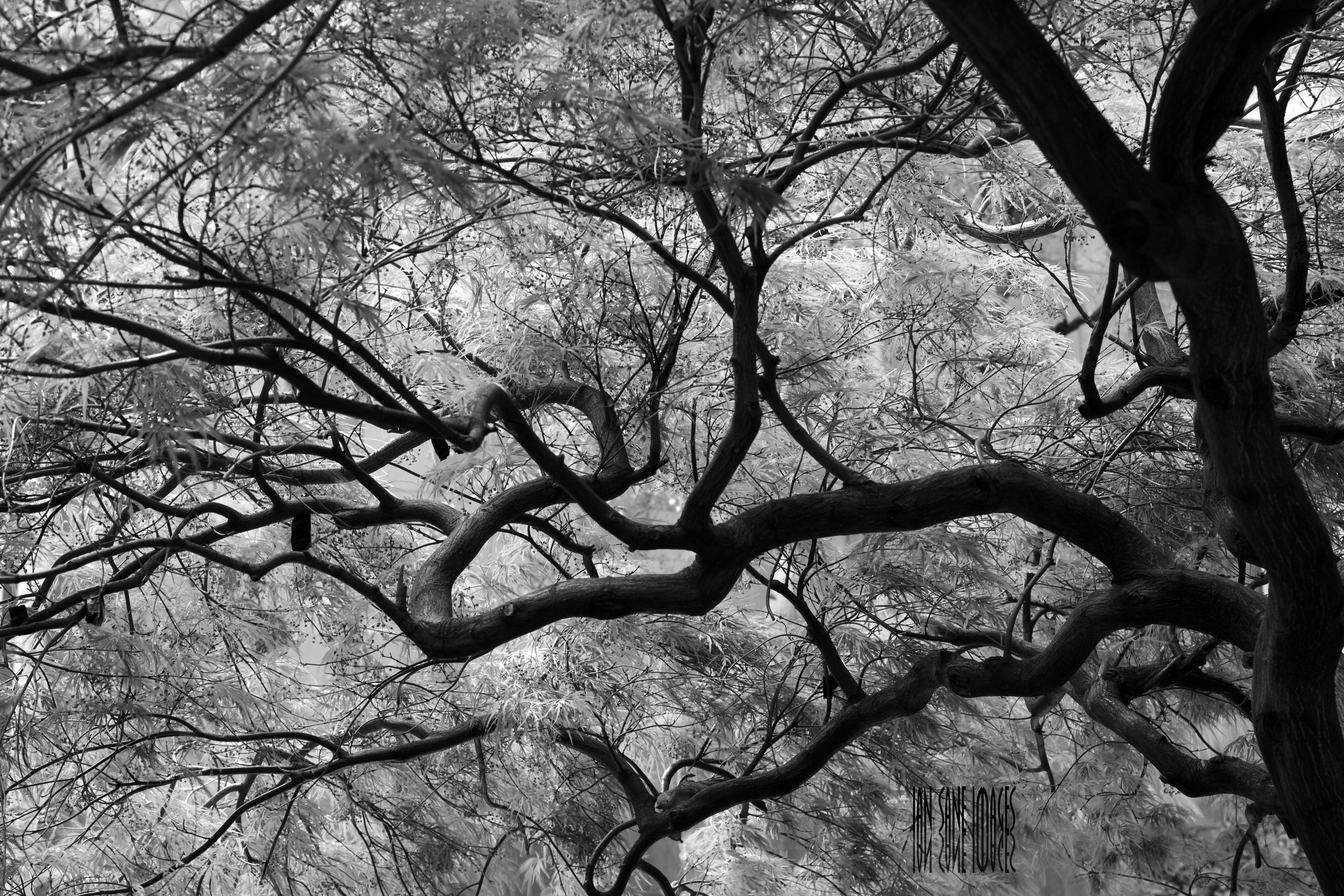 Fotos gratis : árbol, naturaleza, bosque, rama, flor, invierno, en ...