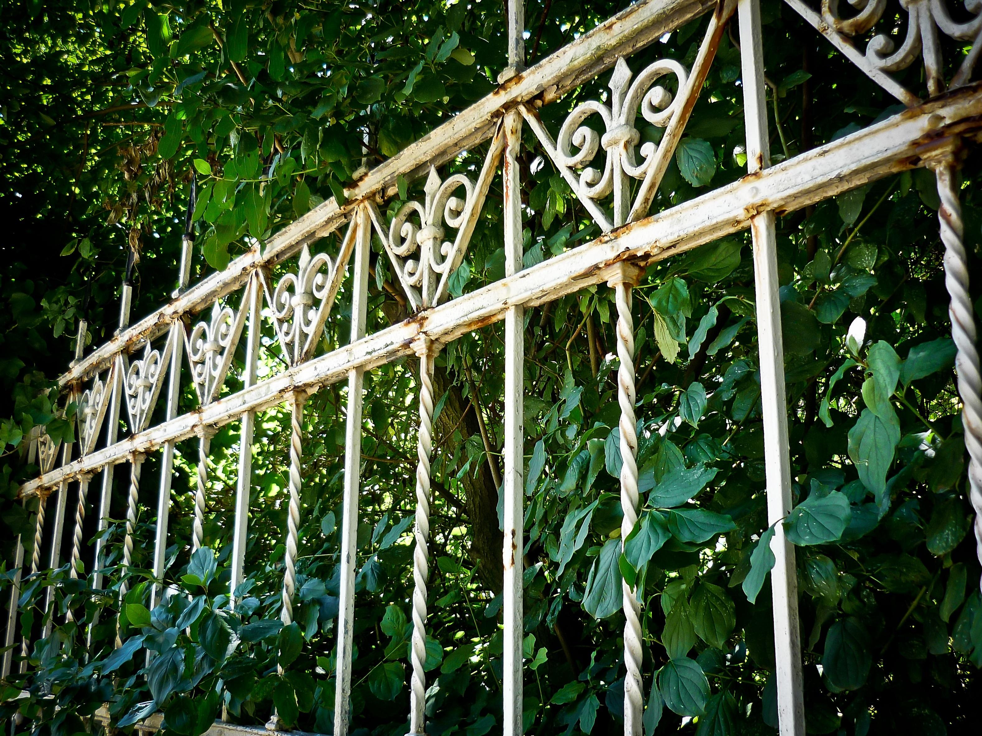 images gratuites arbre la nature branche feuille fleur vieux vert jungle lierre m tal. Black Bedroom Furniture Sets. Home Design Ideas