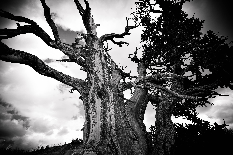 Картинки черное дерево