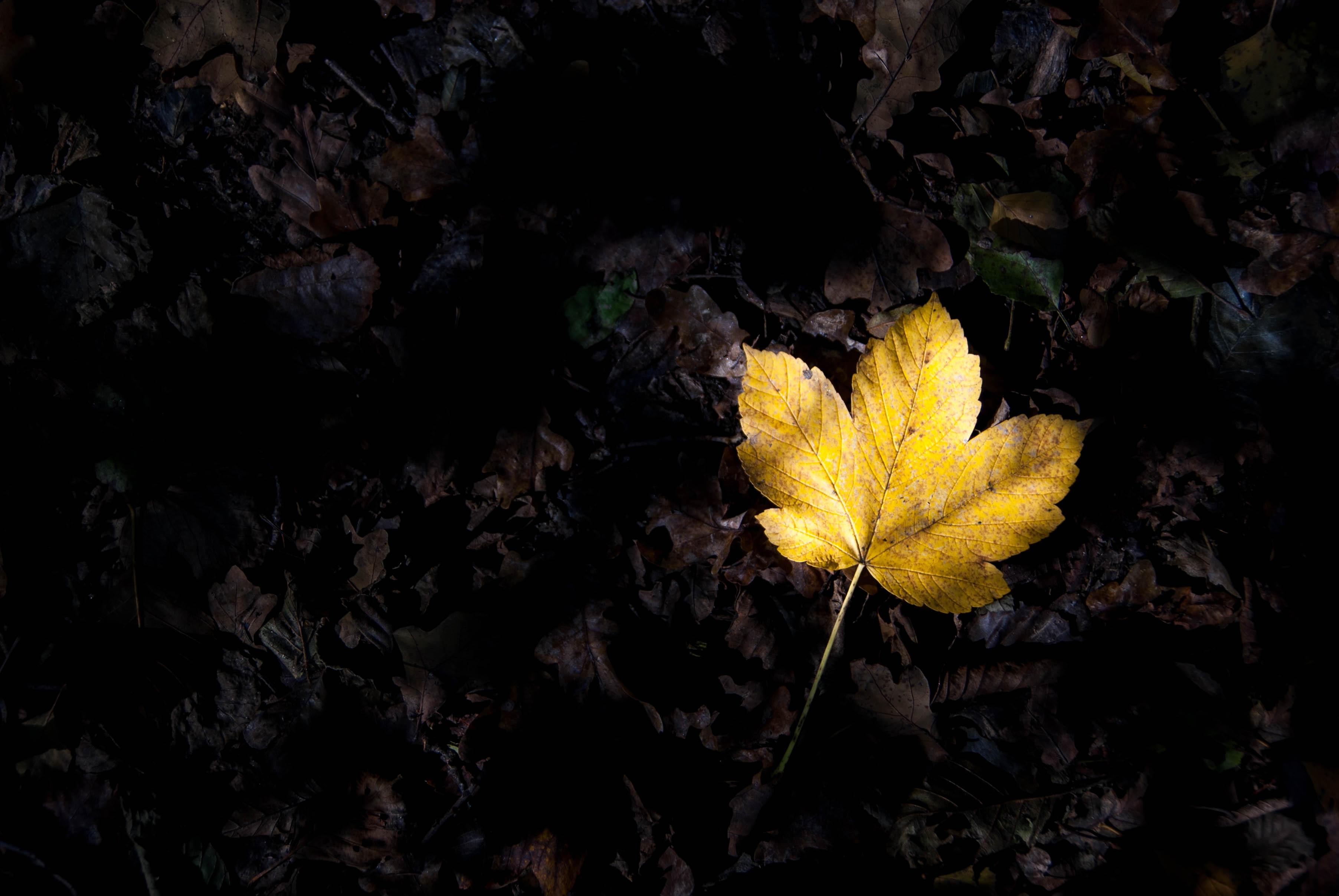 Assez Images Gratuites : arbre, la nature, forêt, branche, nuit, lumière  TM11