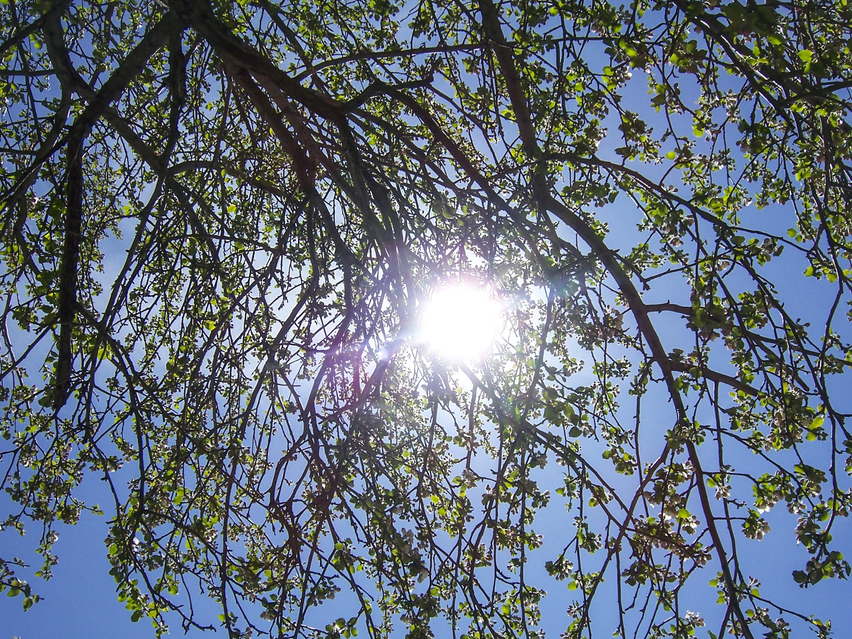 Images gratuites la nature for t branche plante ciel for Plante ligneuse