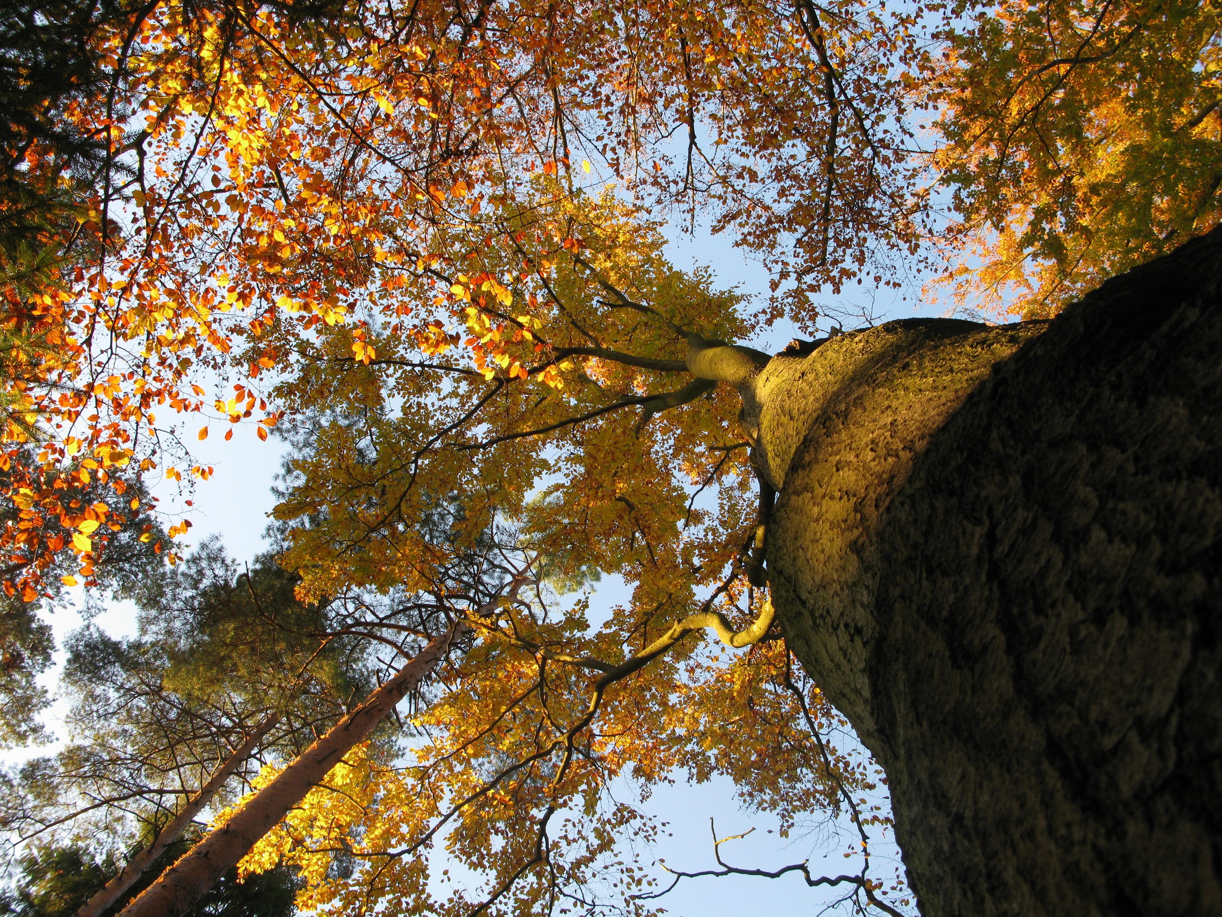 foto de Images Gratuites : arbre, la nature, forêt, branche, plante, ciel ...