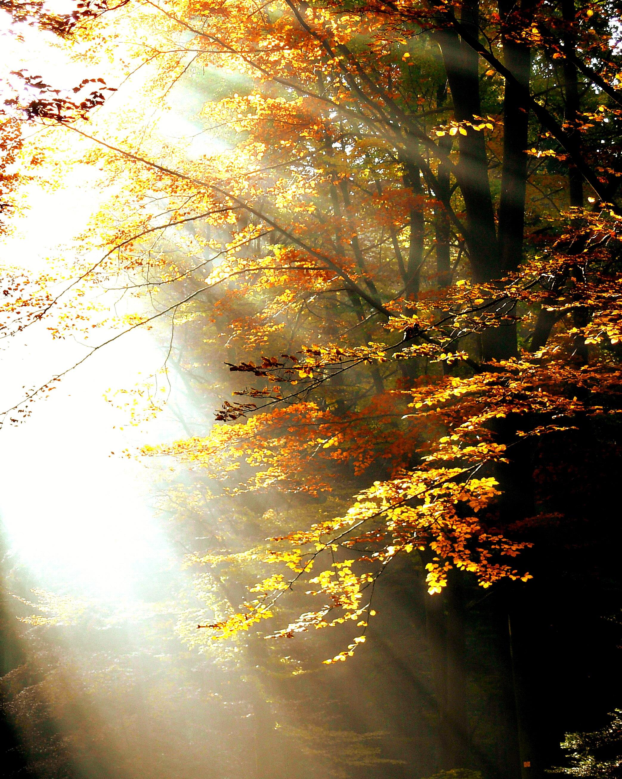 осеннее солнечное утро картинки выборе готовой пластиковой