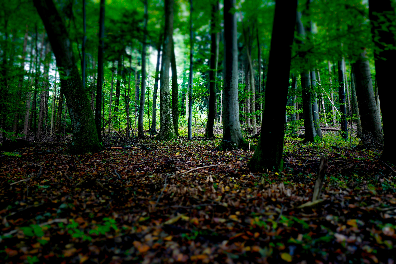 Free Images Tree Nature Branch Light Sunlight: habitat deutschland