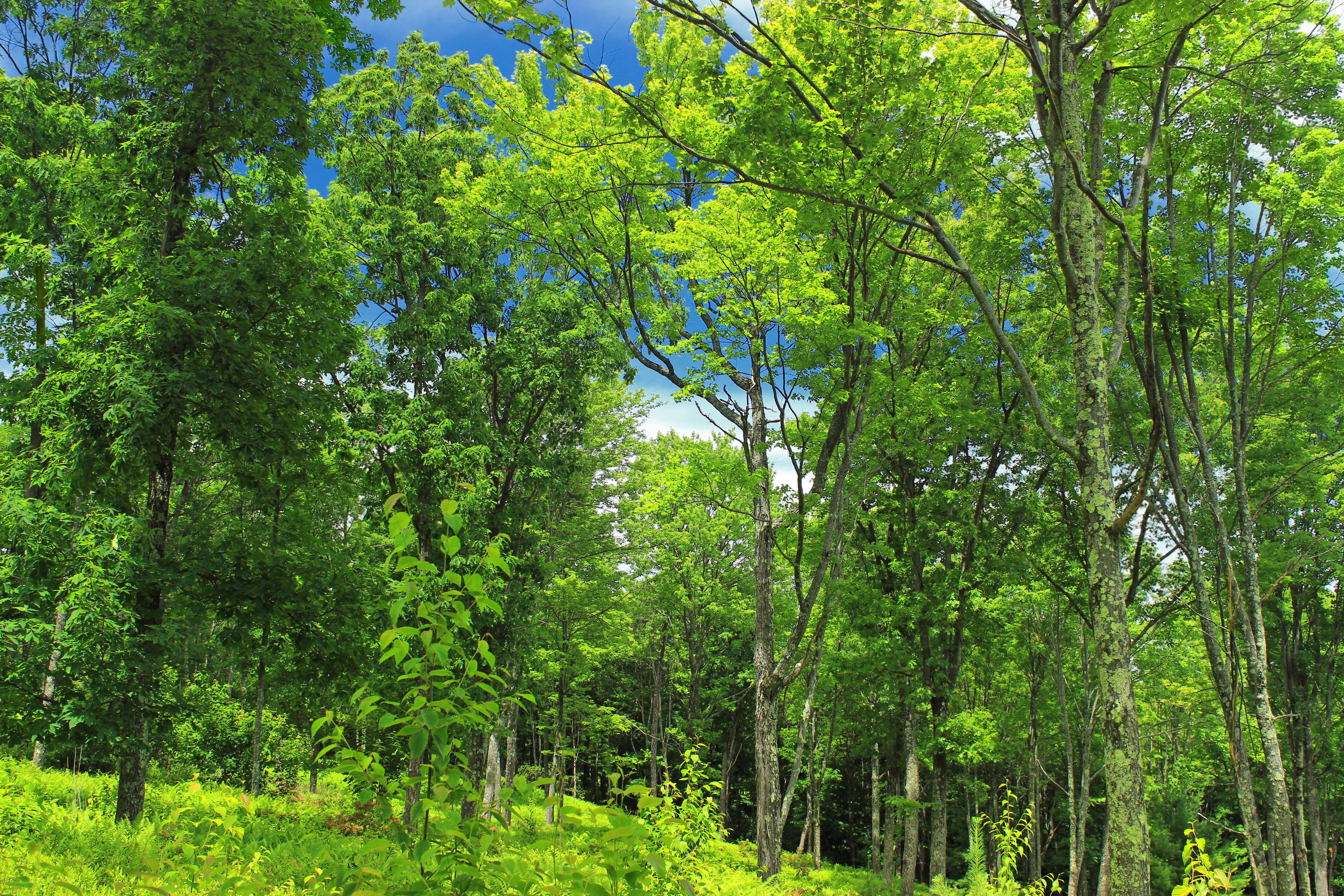 лиственный лес картинки для презентации нужно