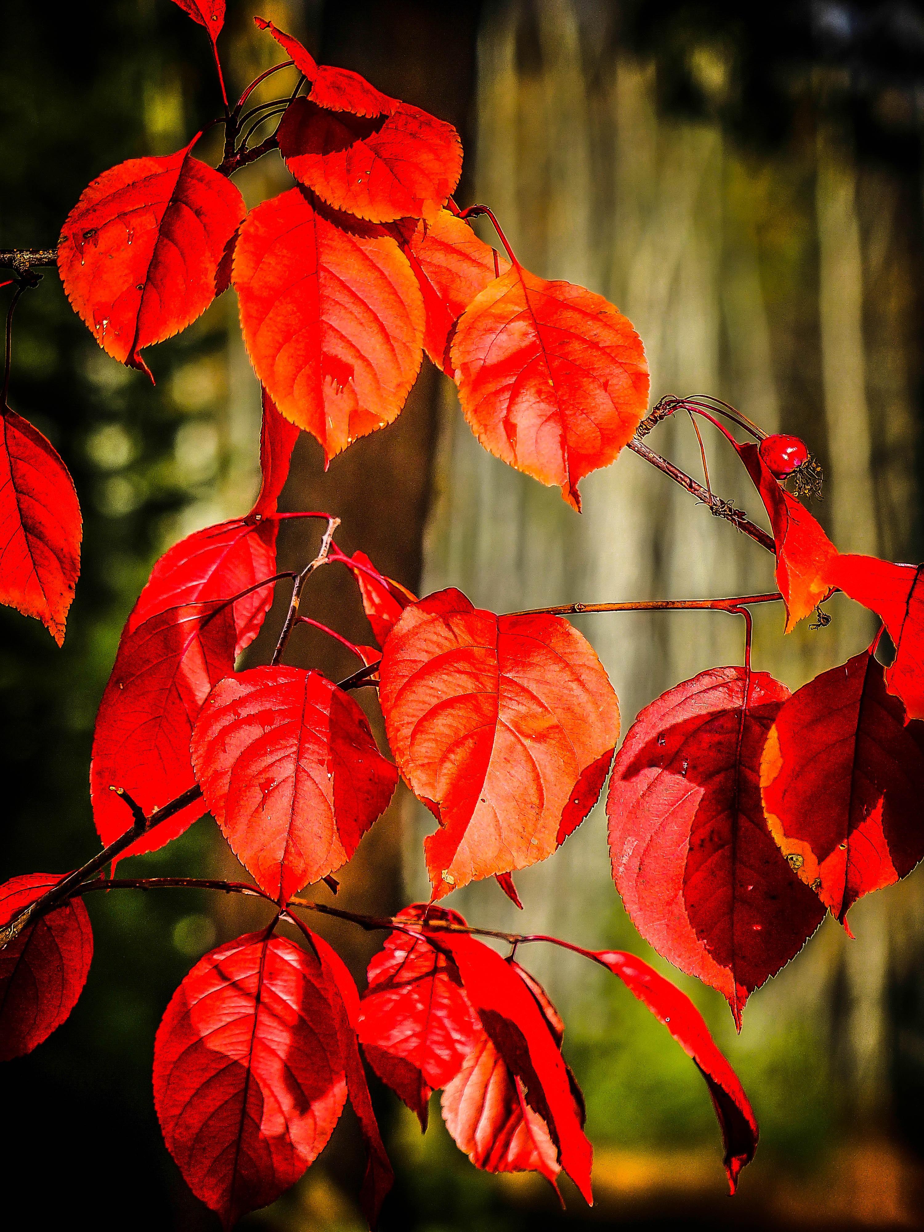 images gratuites : arbre, la nature, forêt, branche, feuille, tomber