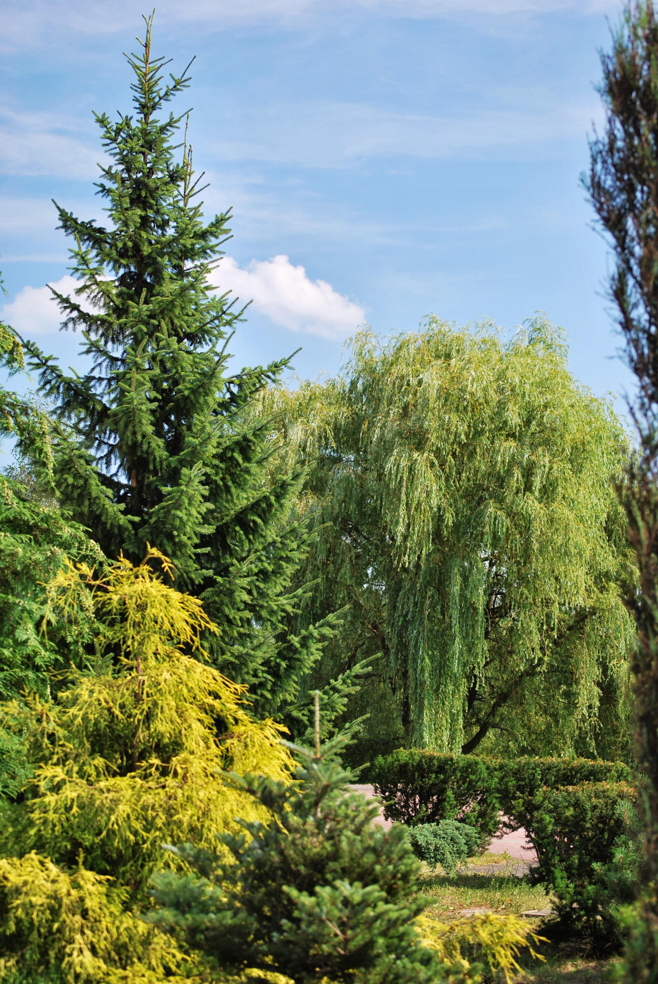 Fotos gratis rbol naturaleza bosque rama planta for Carson bosque y jardin