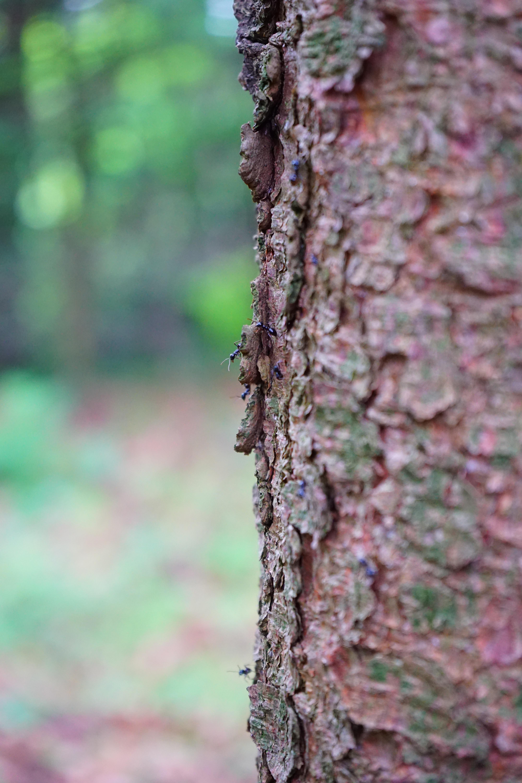 Fotos gratis naturaleza bosque rama hoja flor el for Suelo negro brillante