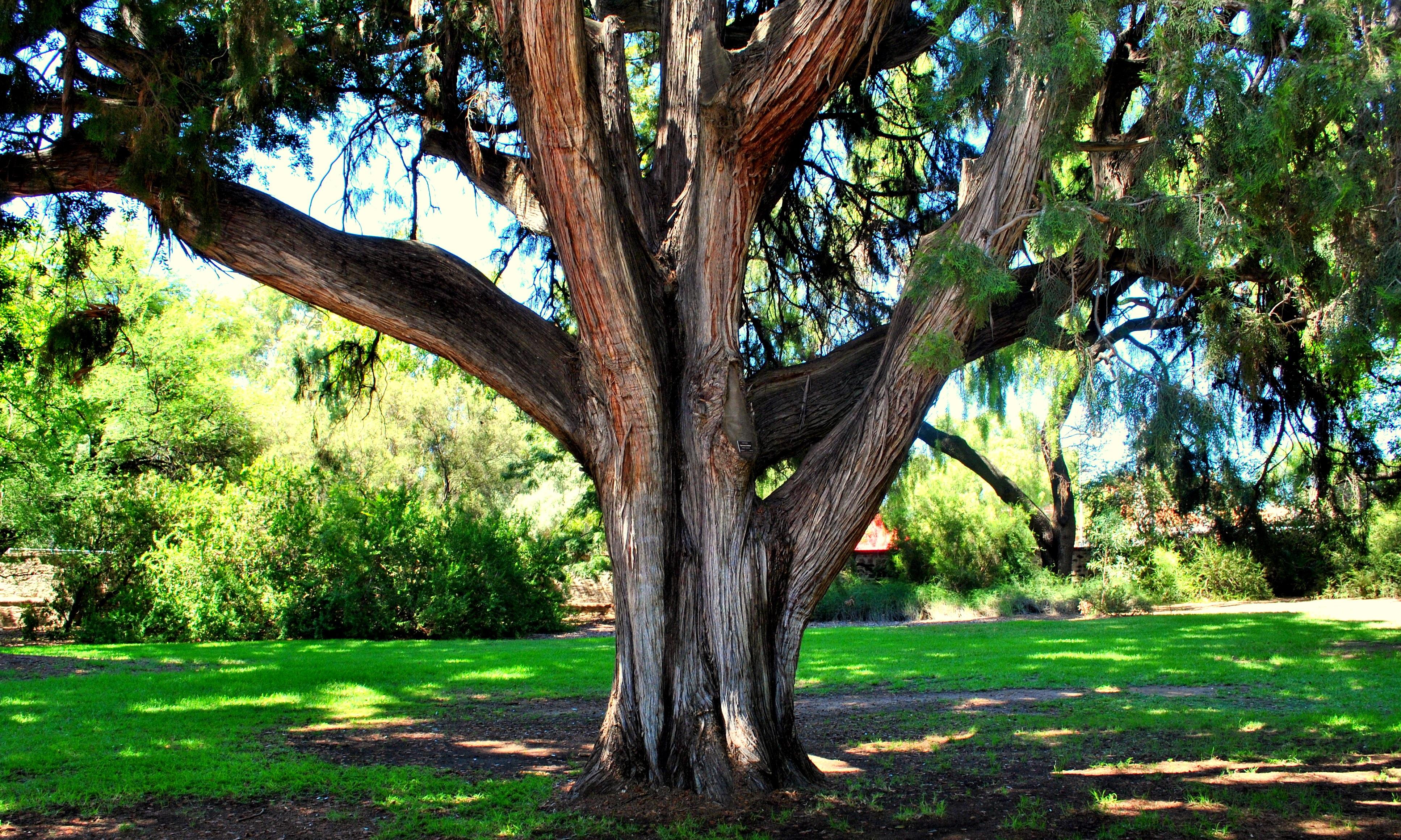 Plantas De Selva Alta: Fotos Gratis : árbol, Naturaleza, Bosque, Rama, Hoja