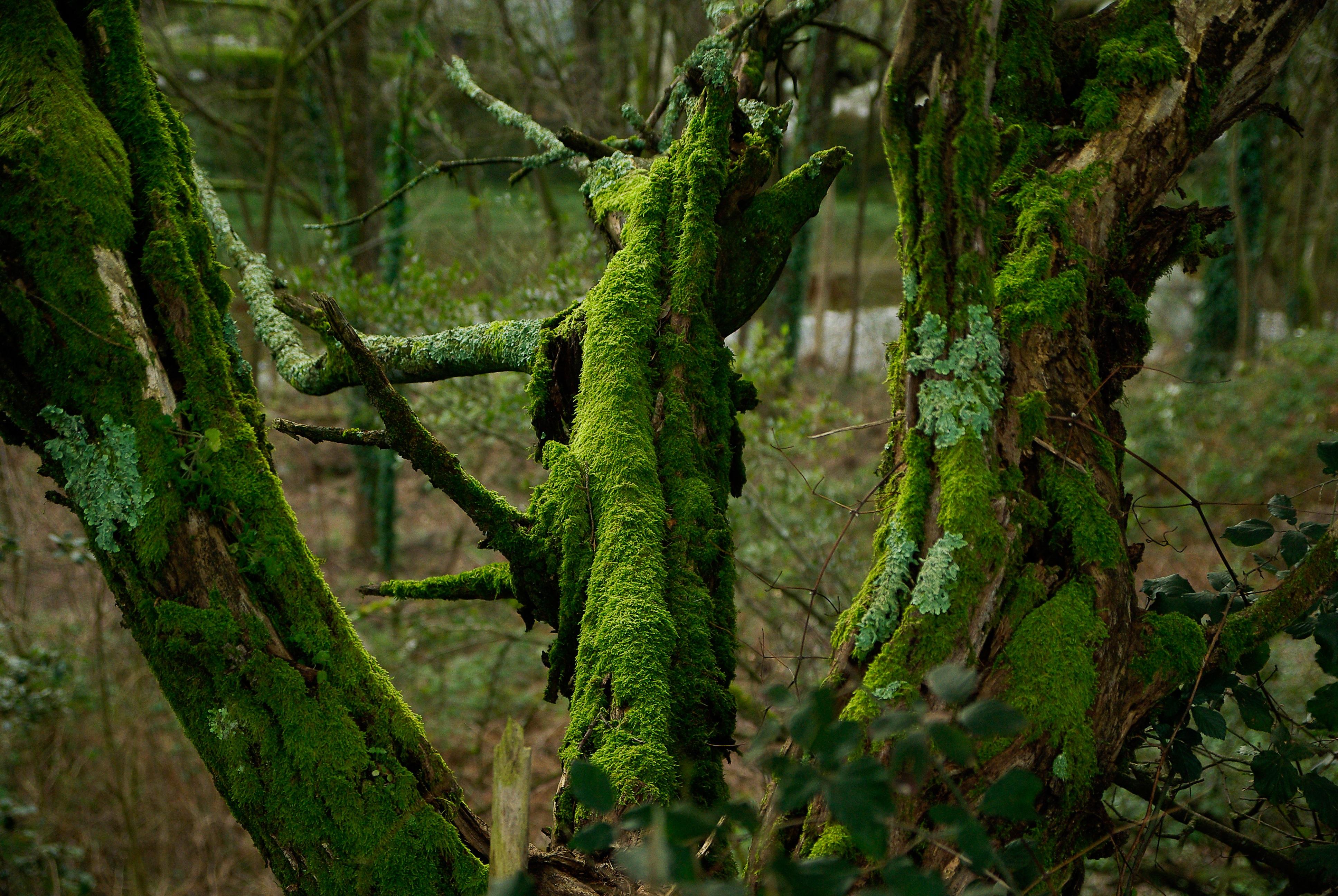 free images nature branch leaf flower moss bark foam wildlife green jungle botany. Black Bedroom Furniture Sets. Home Design Ideas