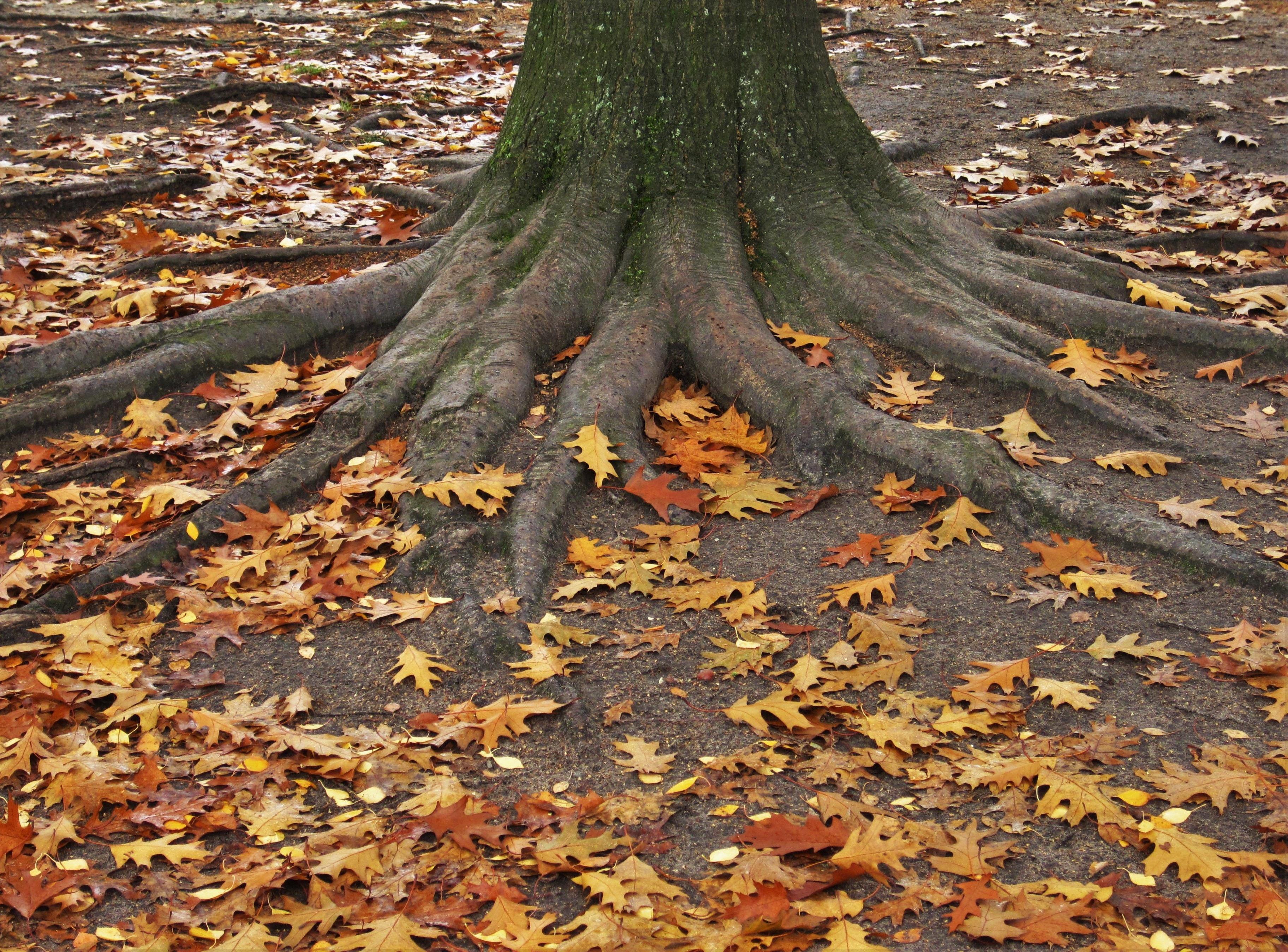 Fotos gratis : naturaleza, bosque, rama, el maletero, Iniciar sesión ...