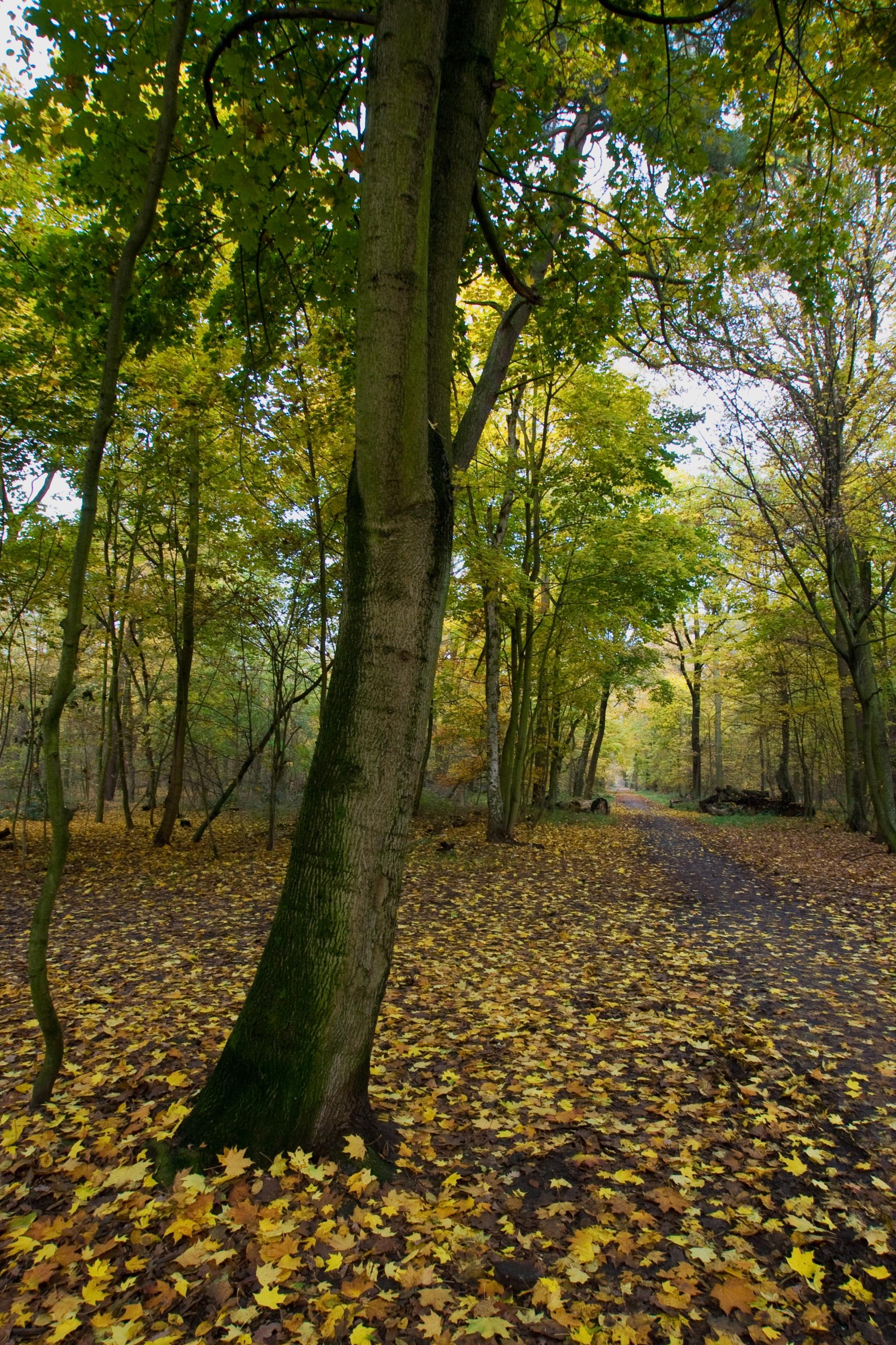 Kostenlose foto : Baum, Natur, Wald, Ast, Wiese, Sonnenlicht, Blatt ...