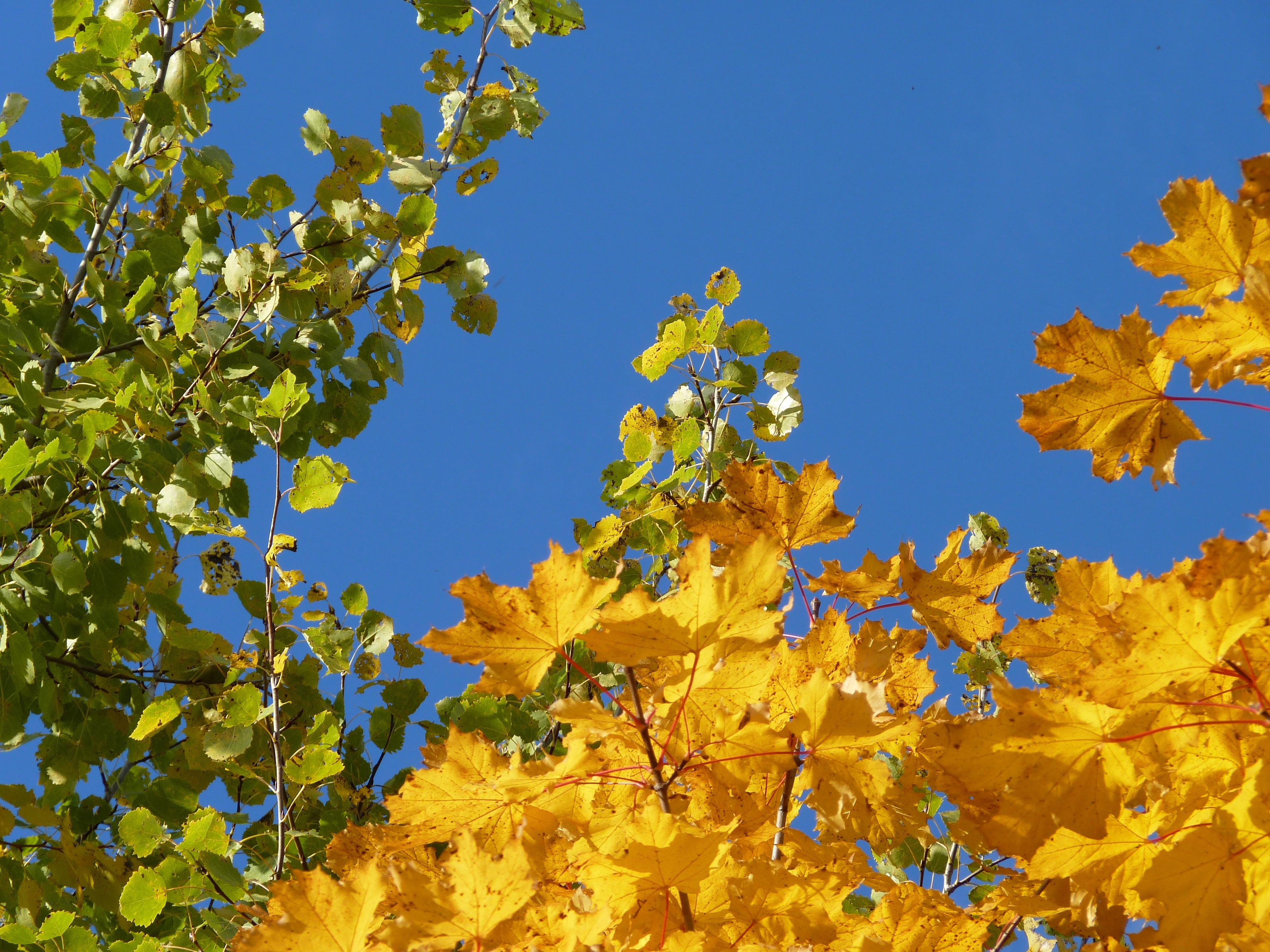 Fotos gratis : naturaleza, rama, prado, luz de sol, hoja, flor ...
