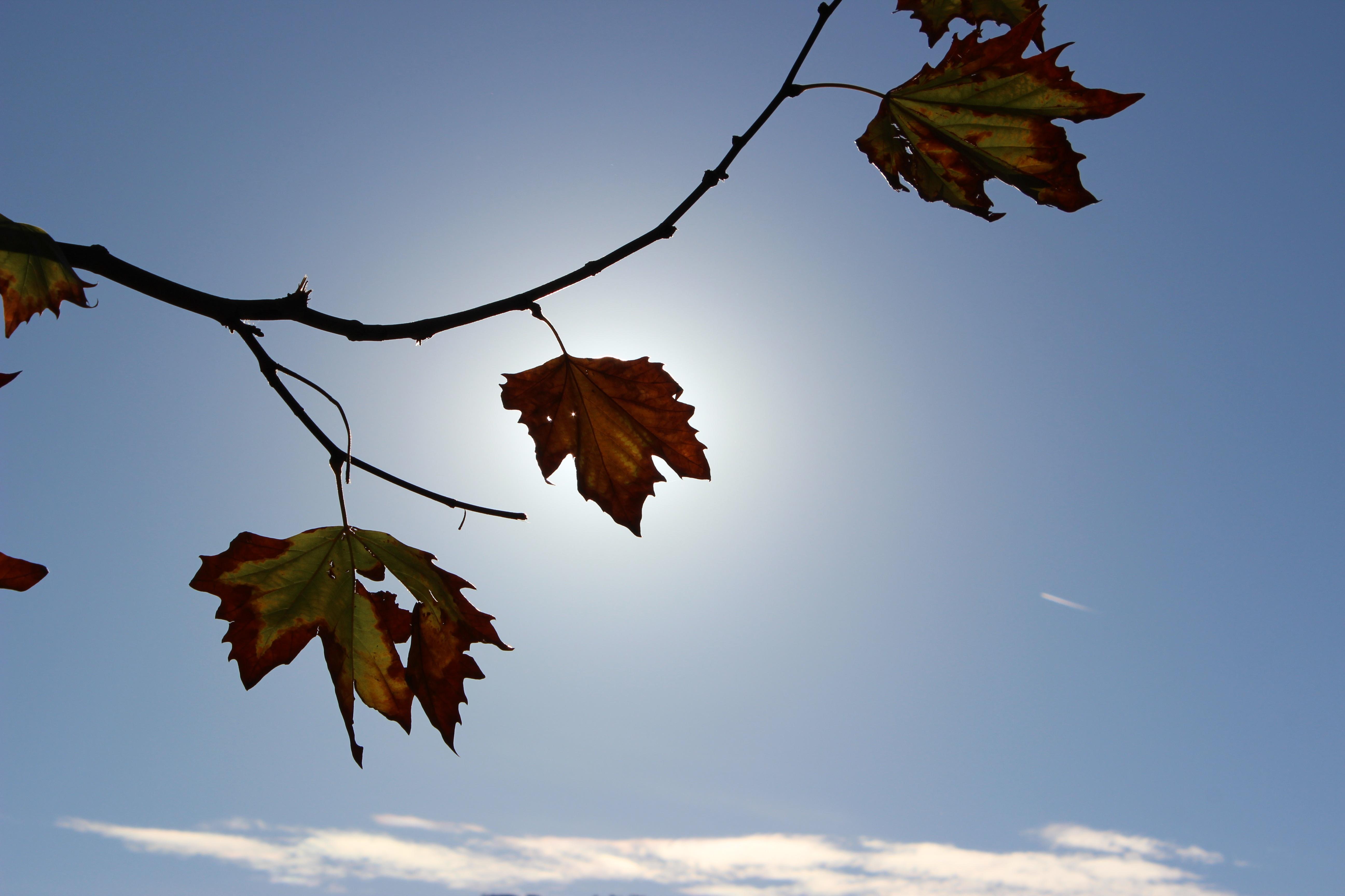 фотография картинка улетающие листья этой