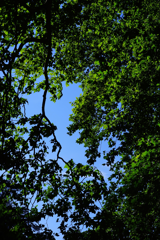 Fotos gratis rbol naturaleza bosque rama planta for Arboles para plantar en verano